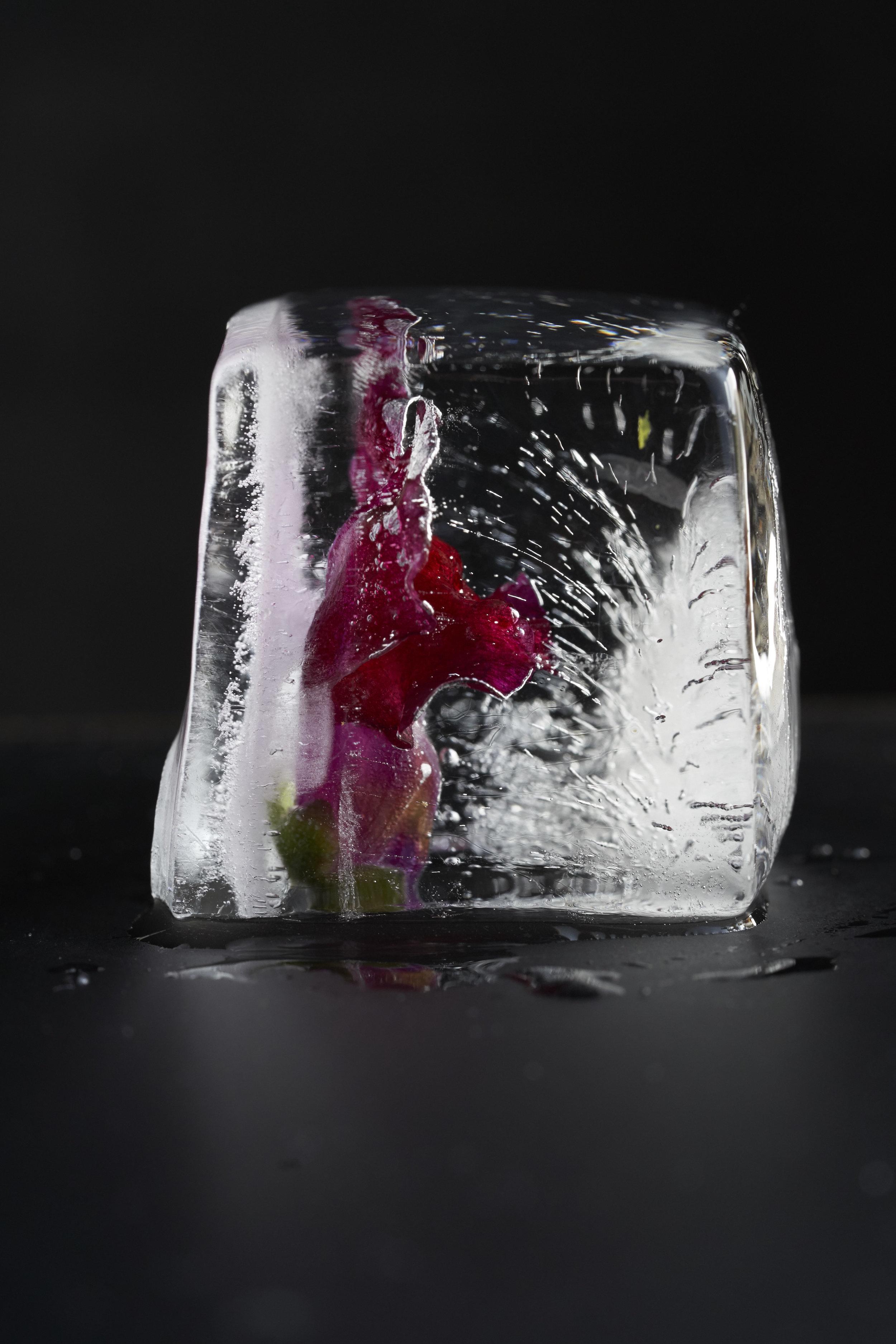 Ice_0358.jpg