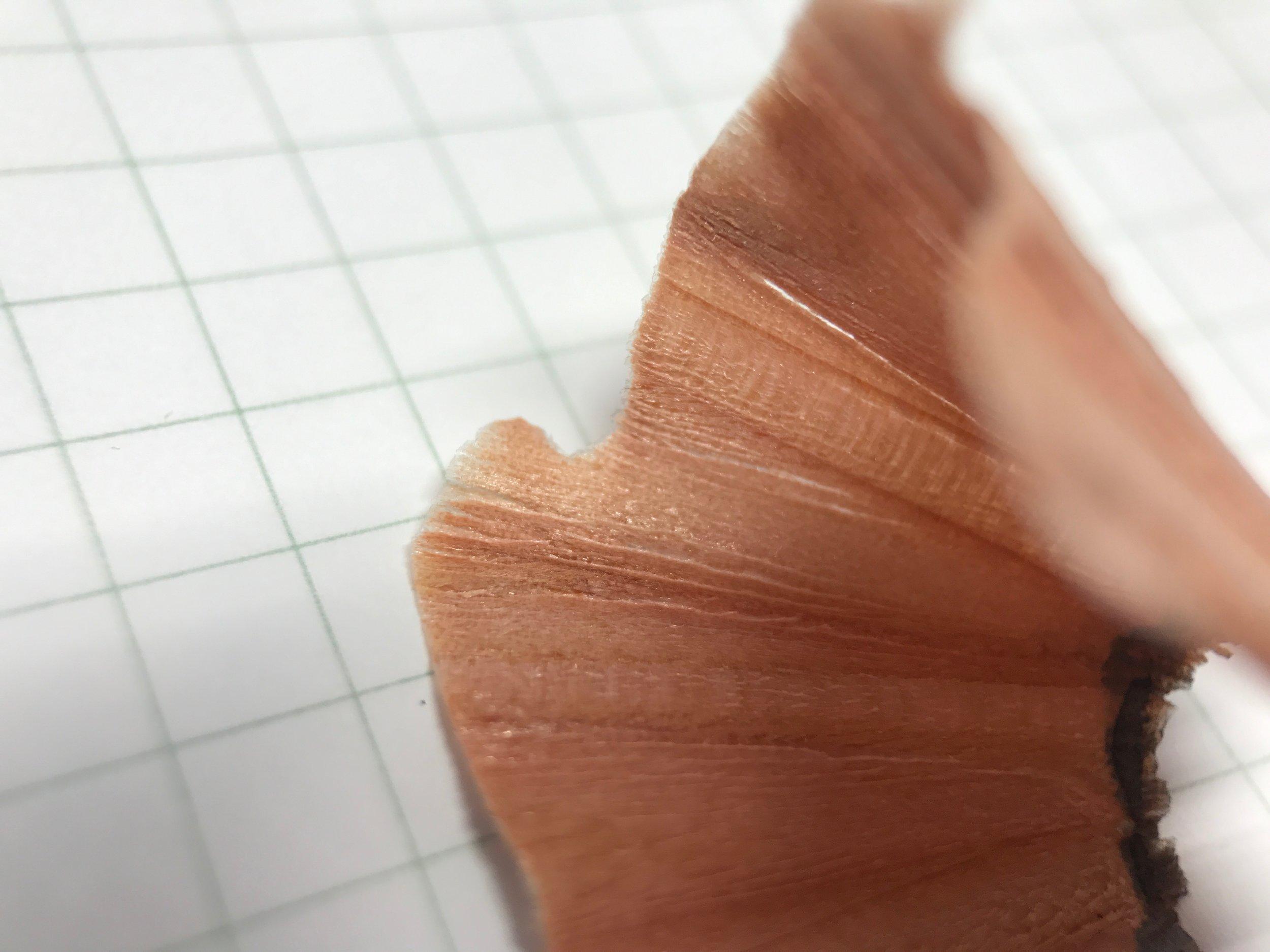 kirin-woody-pal-eddy-pencil-9.jpg