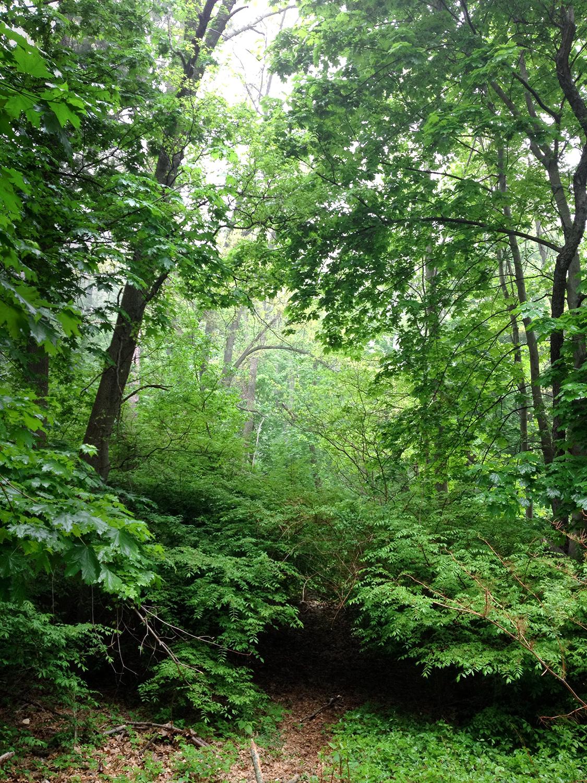 Forest-Trees-Morning-Walk-Portal.jpg