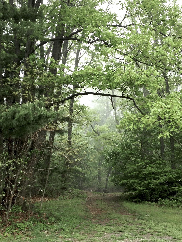 Forest-Trees-Morning-Walk.jpg