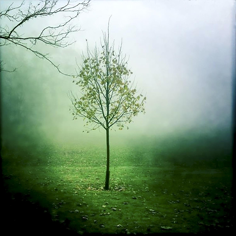 Tree-Park-Green.jpg