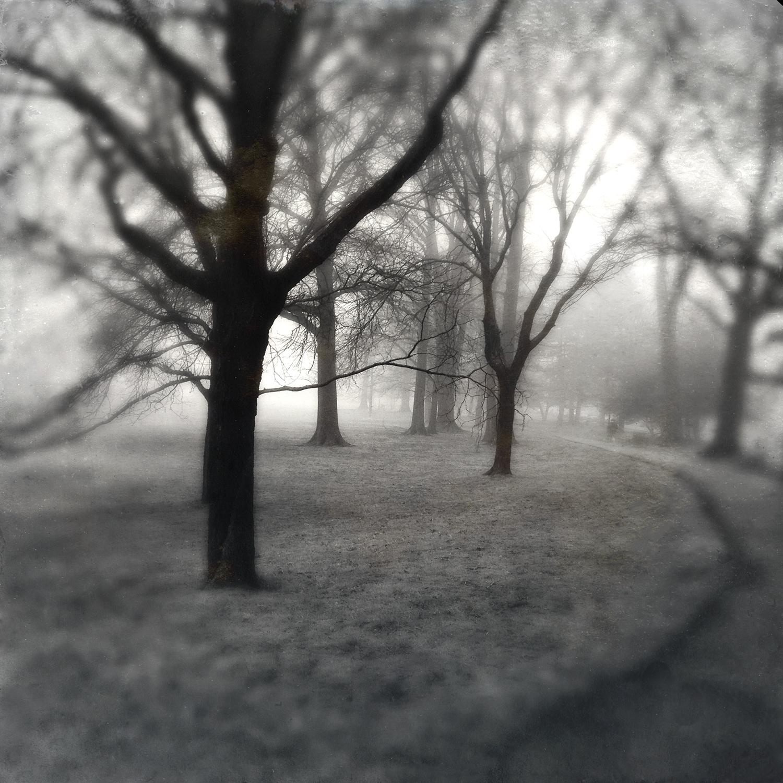 Trees-Park-Path-Morning-Walk.jpg