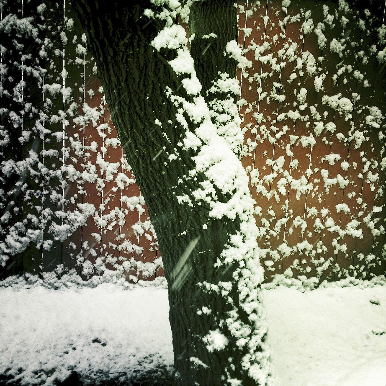 Tree-Winter-Blizzard-Snow.jpg