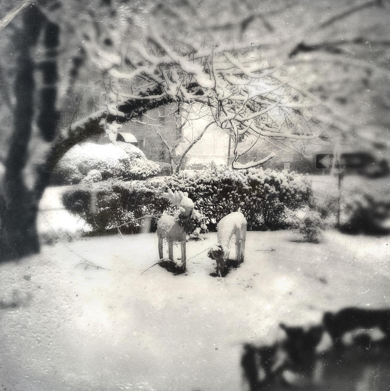 Winter-Reindeer-Lawn-Ornaments.jpg