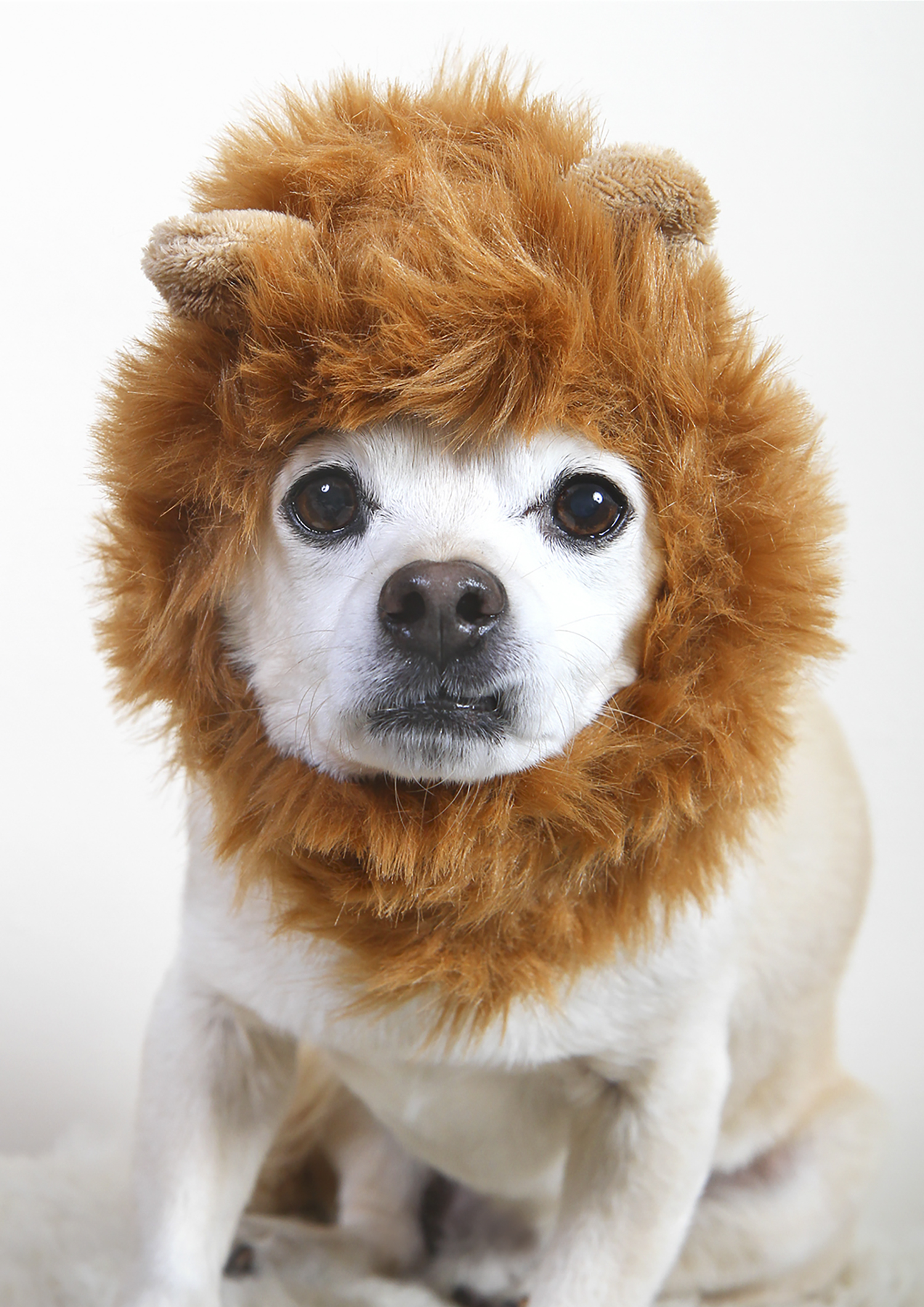 In Like a Lion...