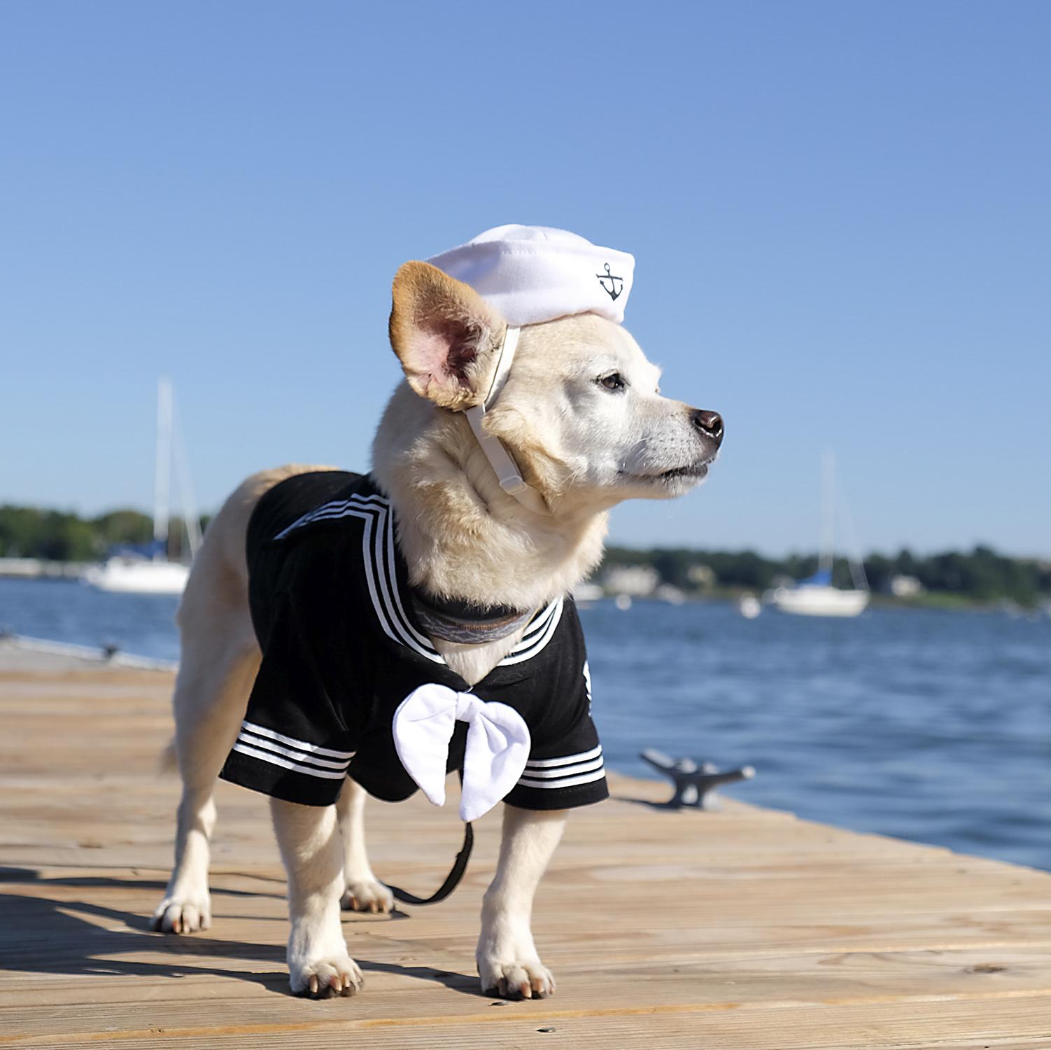 Ahoy Eddie