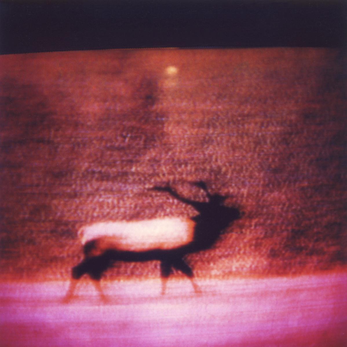 Television-TV-Polaroid-SX70-Elk-Surreal.jpg