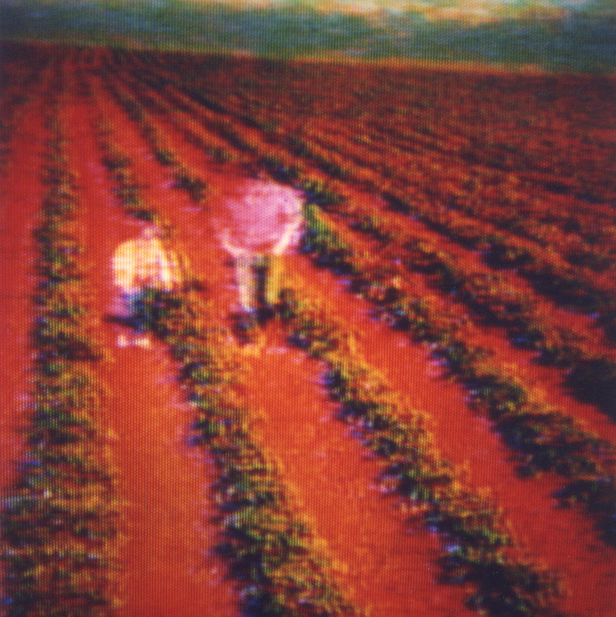 Television-TV-Polaroid-SX70-Surreal-Farm.jpg