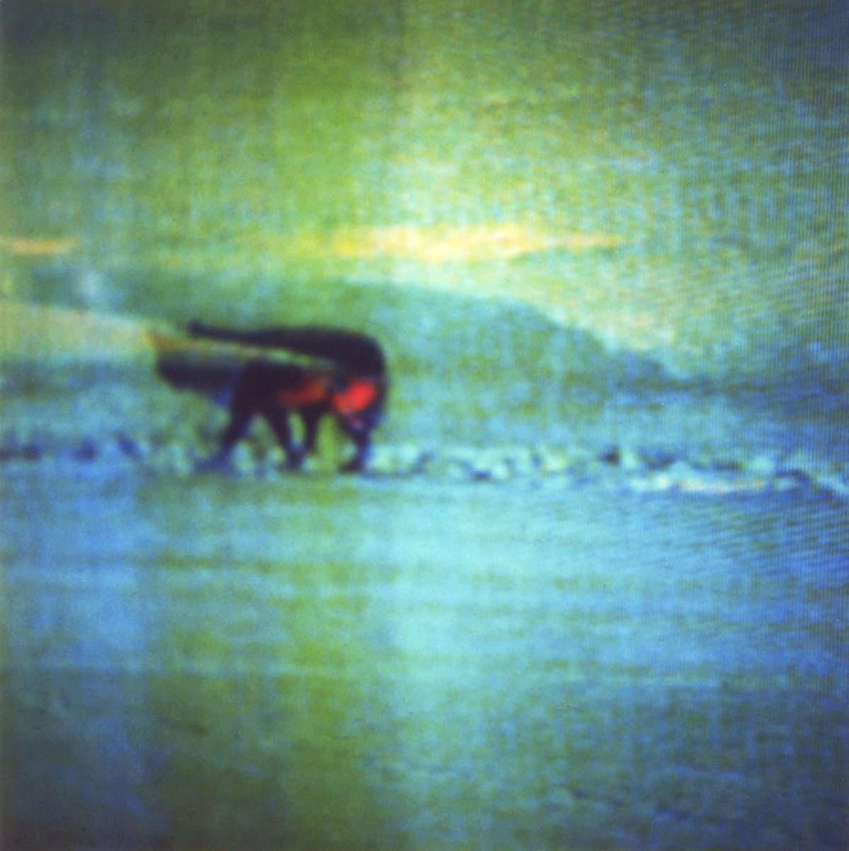 Television-TV-Polaroid-SX70-Surreal-Wolf.jpg