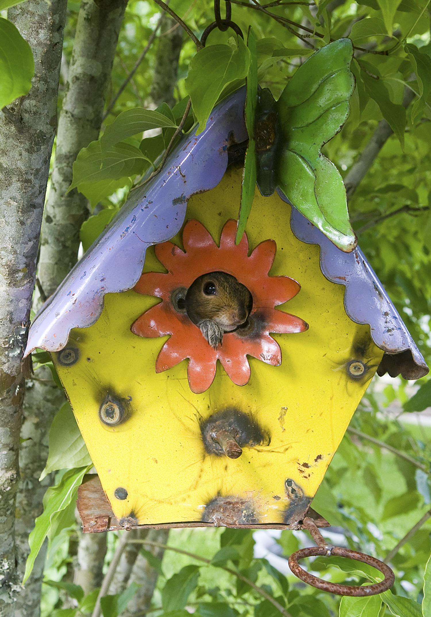 Squirrel-Wildlife-Sanctuary-Birdhouse.jpg