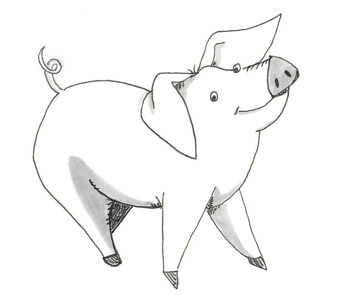 Pig sketch edited.jpg