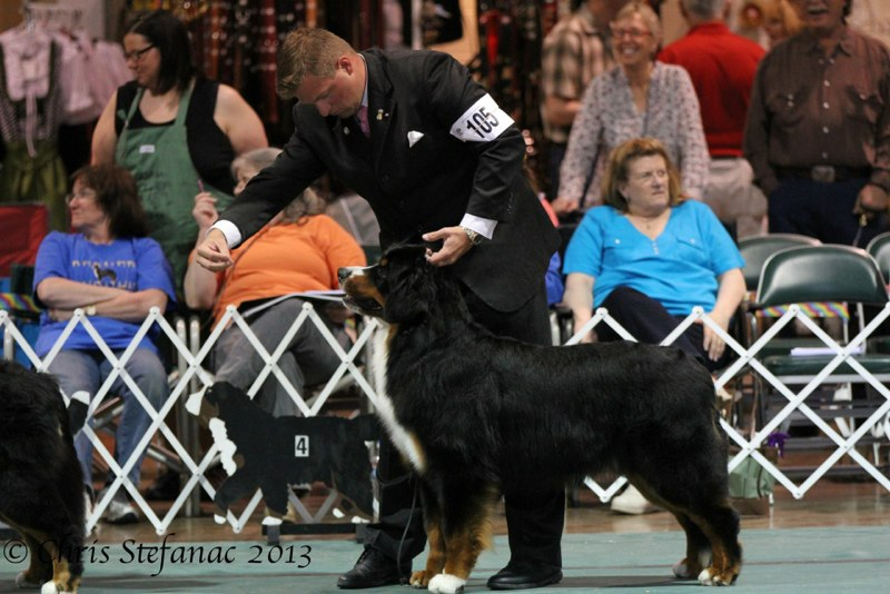 Wesley at the 2013 Nationals 2nd place 15-18 mos. class Thank you Helen Davenport-Willis!Thank you Kevin Bednar for the expert handling.