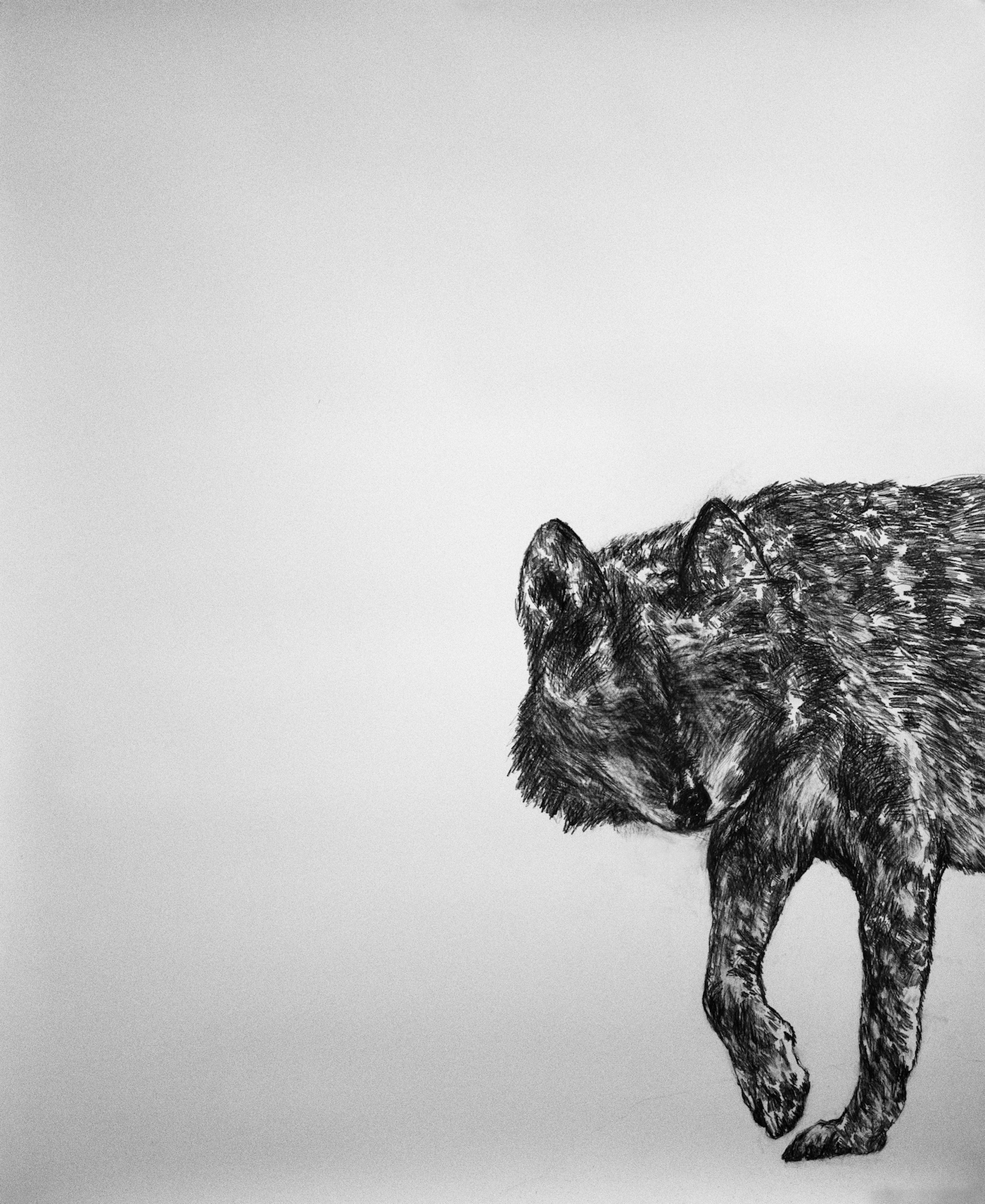 """From the series """"Animales"""", graphite on cotton paper, 143 x 115 cm., 2015."""