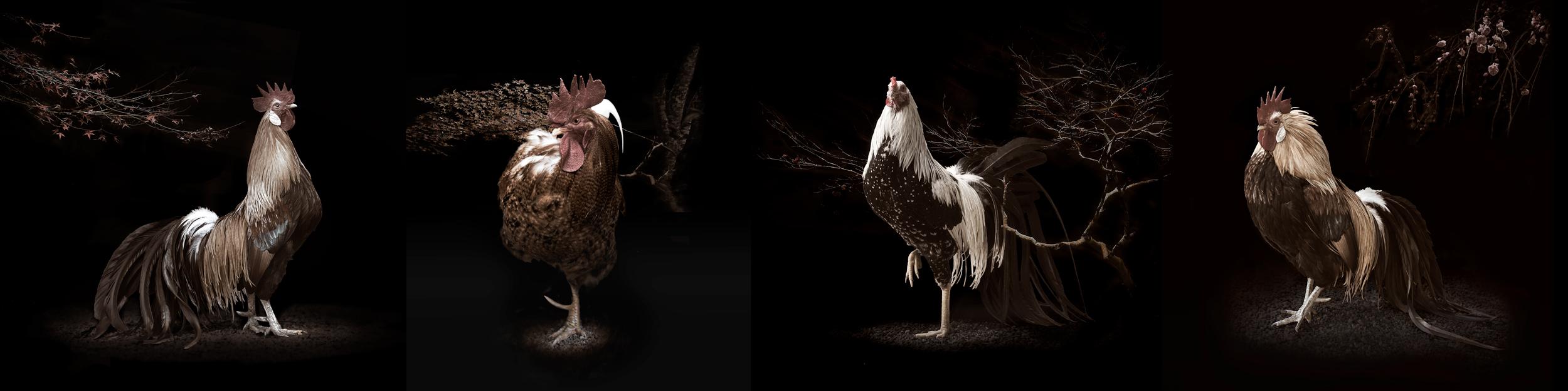 mythicalchicken.jpg