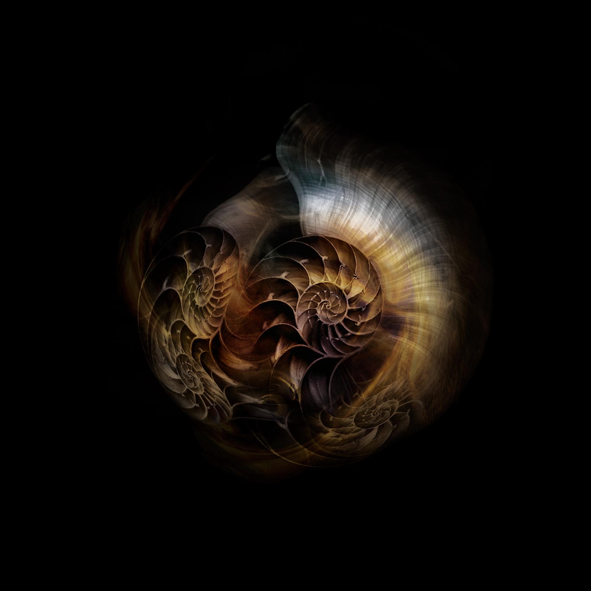 Spirals1.jpg