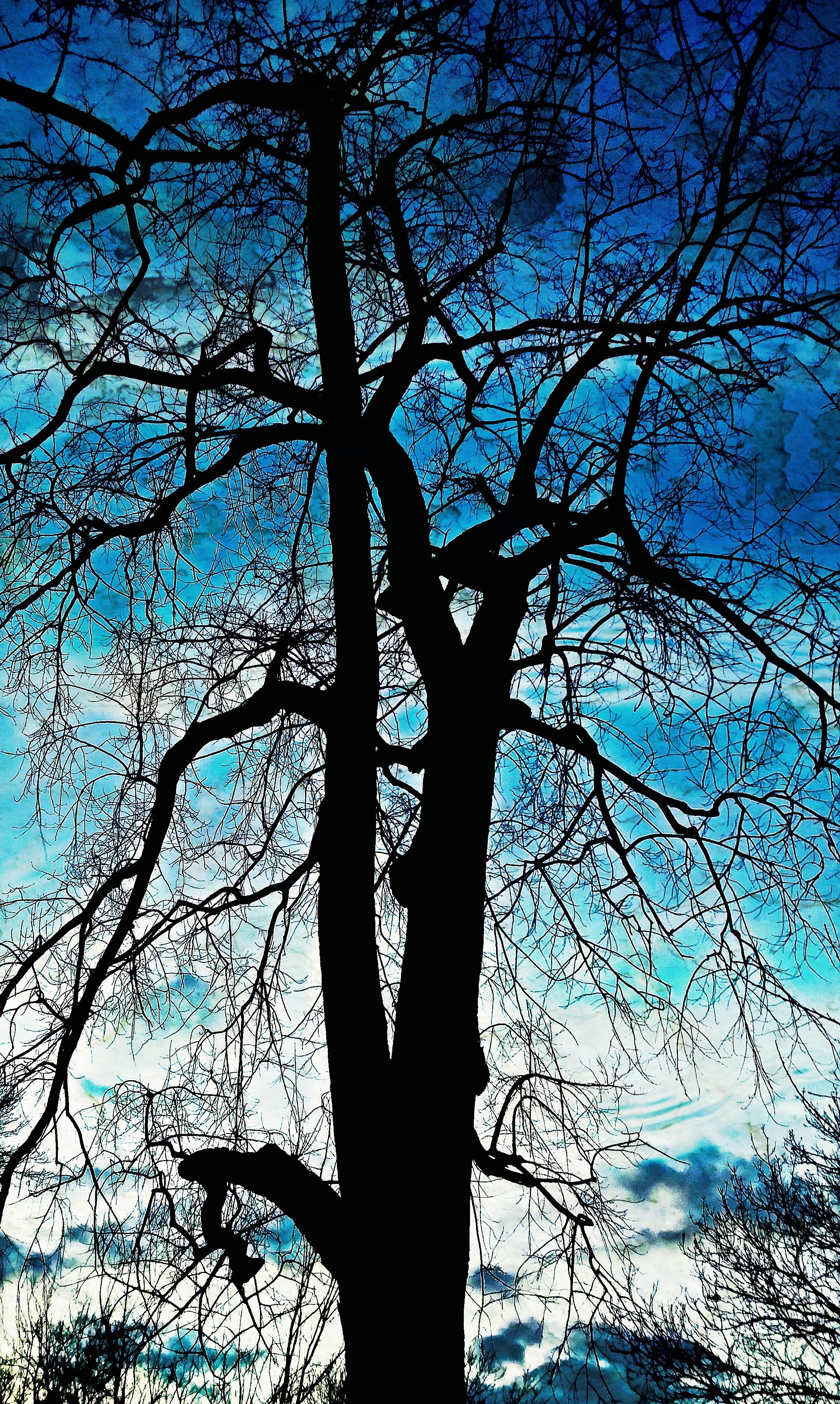 The Ghostly Tree by Diamante Lavendar.jpg