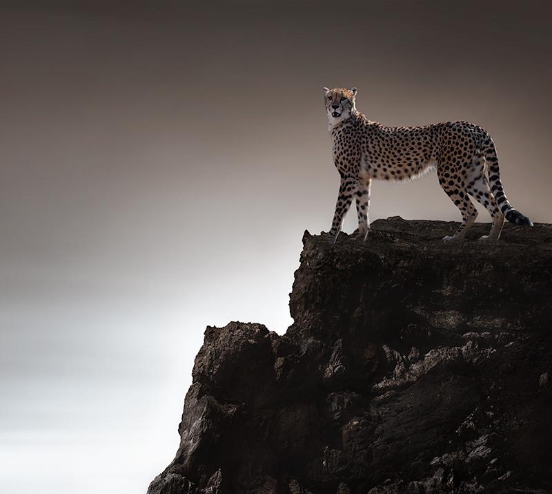 ErikoKaniwa_Cheetah.jpg