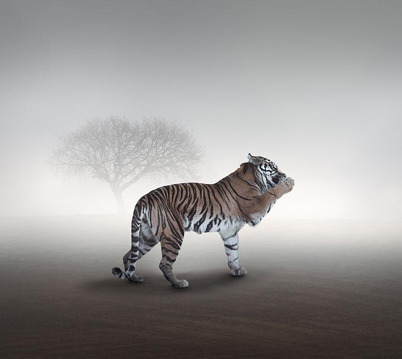 ErikoKaniwa_Tiger.jpg