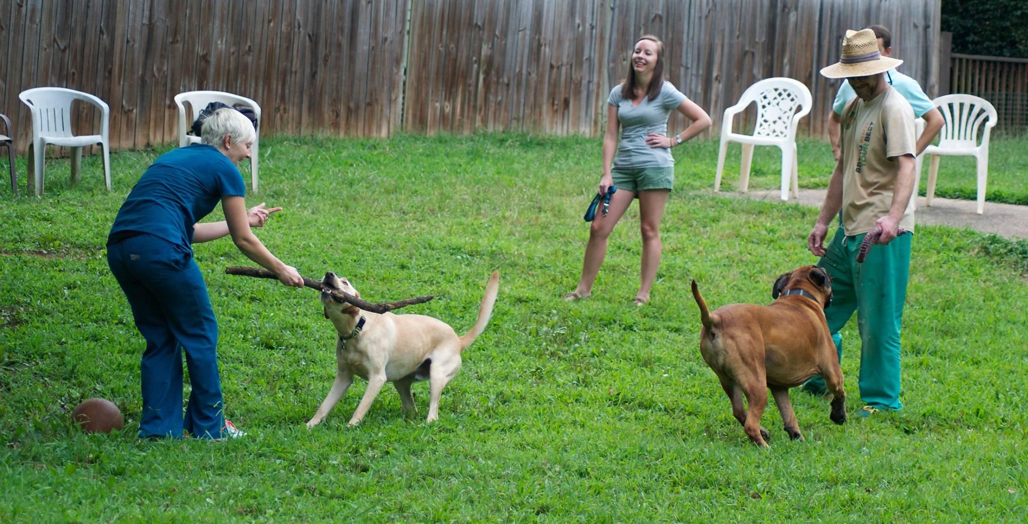 Ormewood Dog Yard