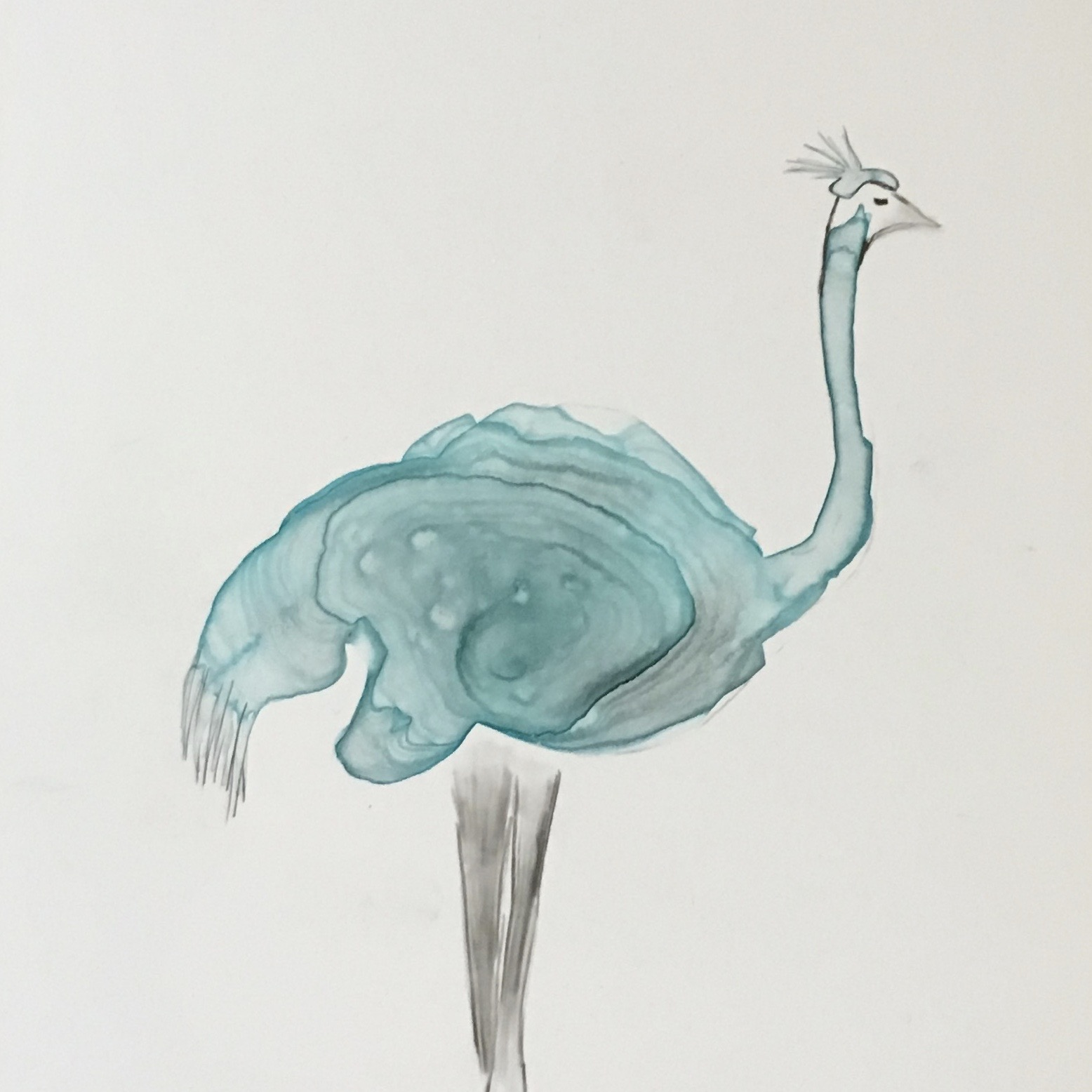 Ostrich with Hat