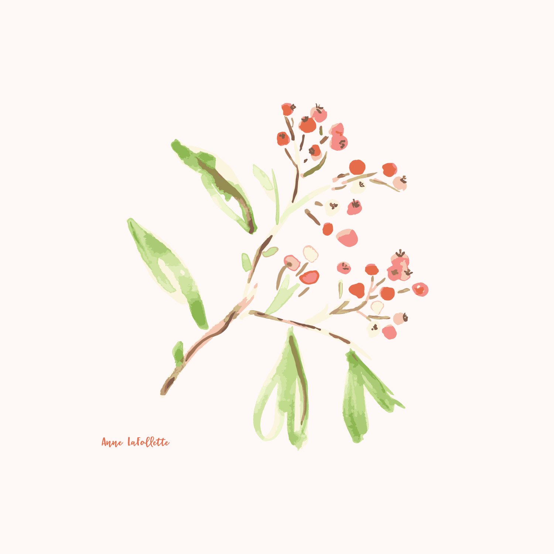 Watercolor-Firethorn.jpg