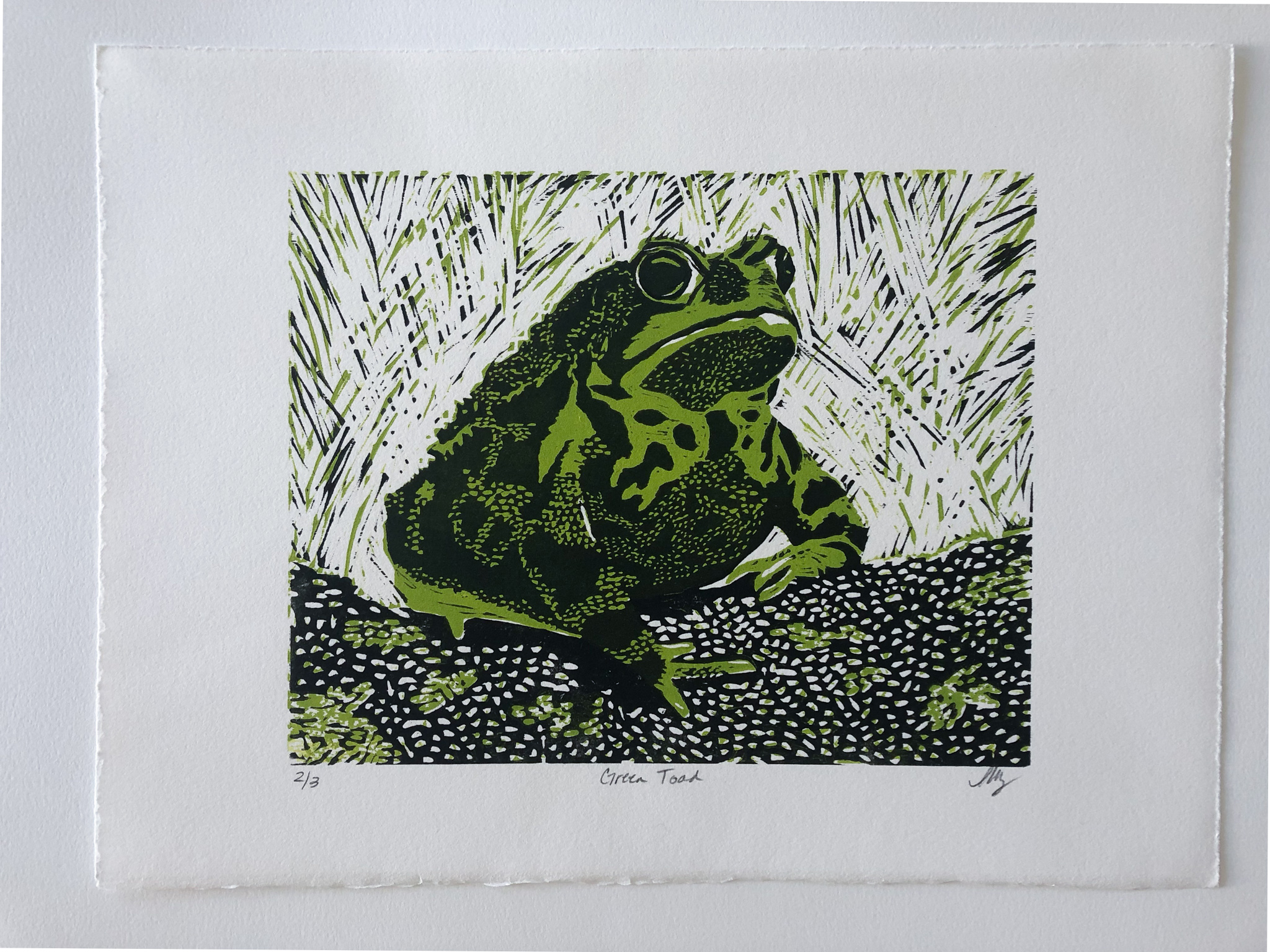 Heather Lowery green toad.jpg