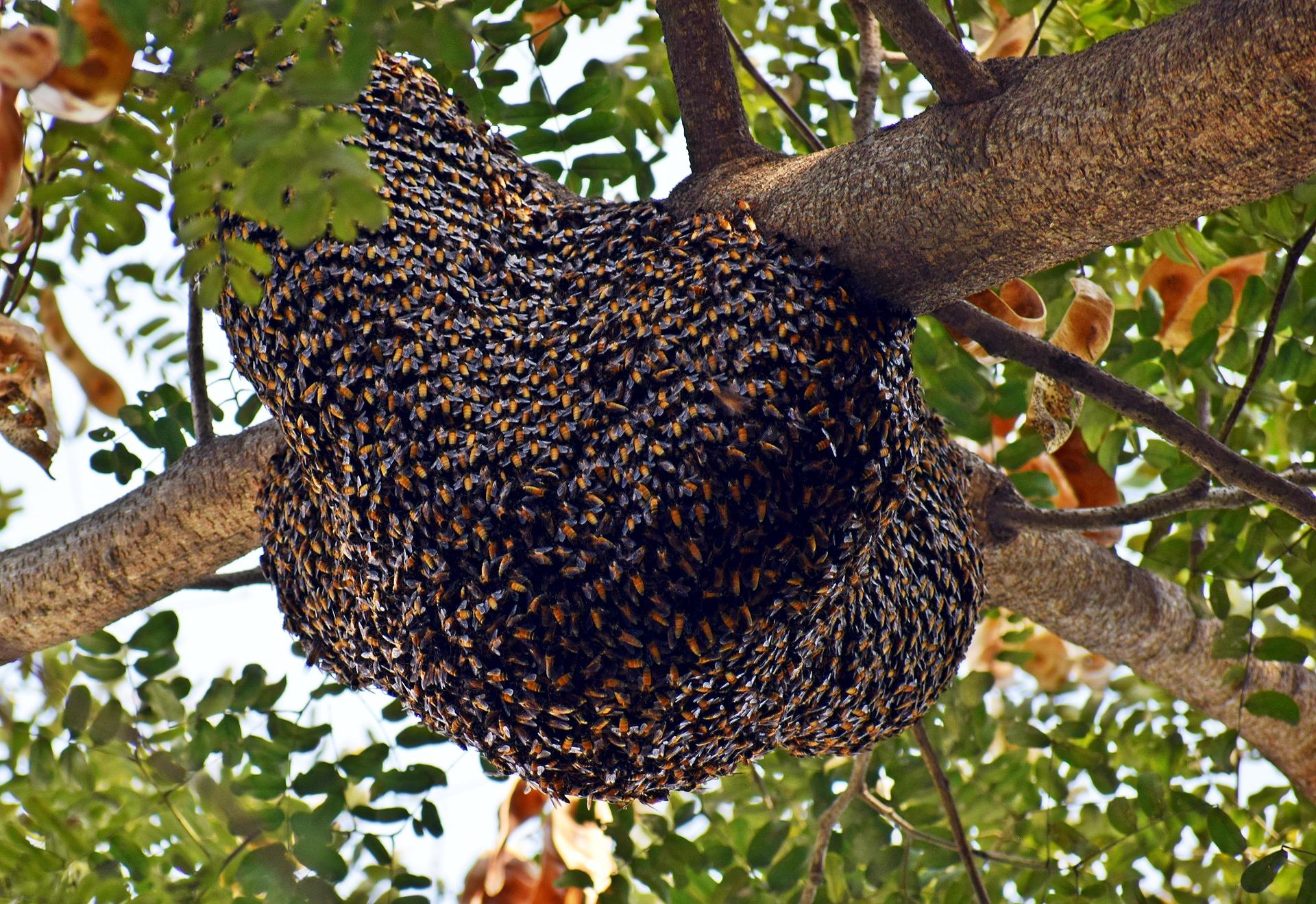 beehive-3960986_1920.jpg