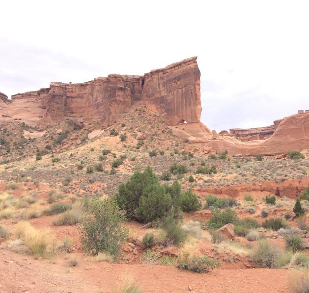 Canyonlands Cryptobiotic Crust
