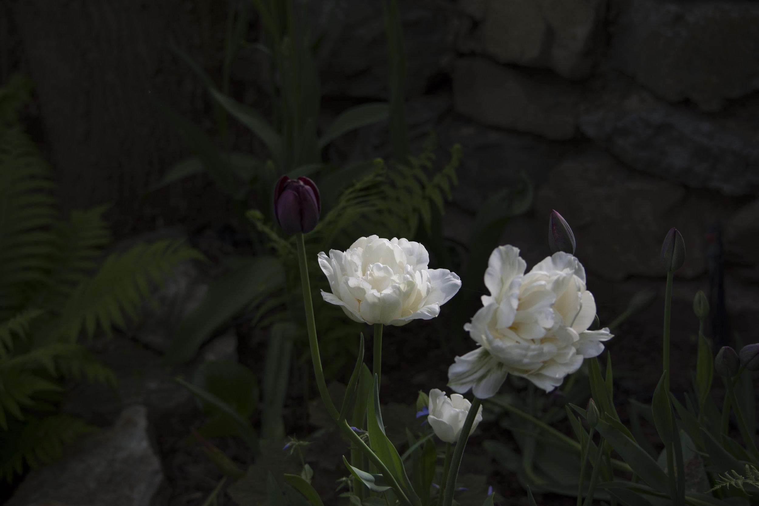1 DSC_6599.jpg