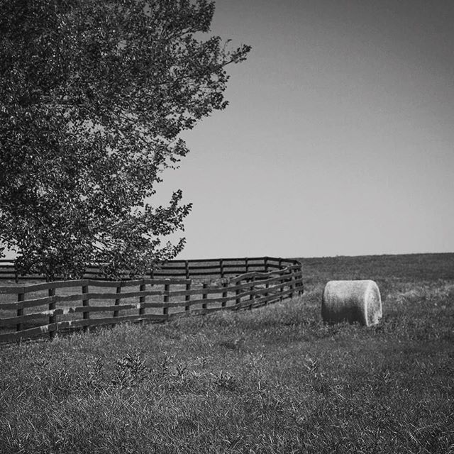 Foxcroft rd always has something that captures your attention! #bwphoto #middleburginbw #middleburgva #middleburg #foxcroft #blackandwhitephoto