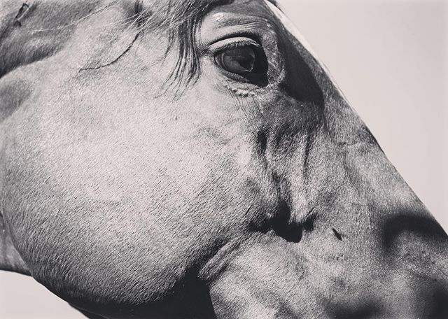 A real closeup! #middleburgva #middleburg #middleburgmoment #bwphoto