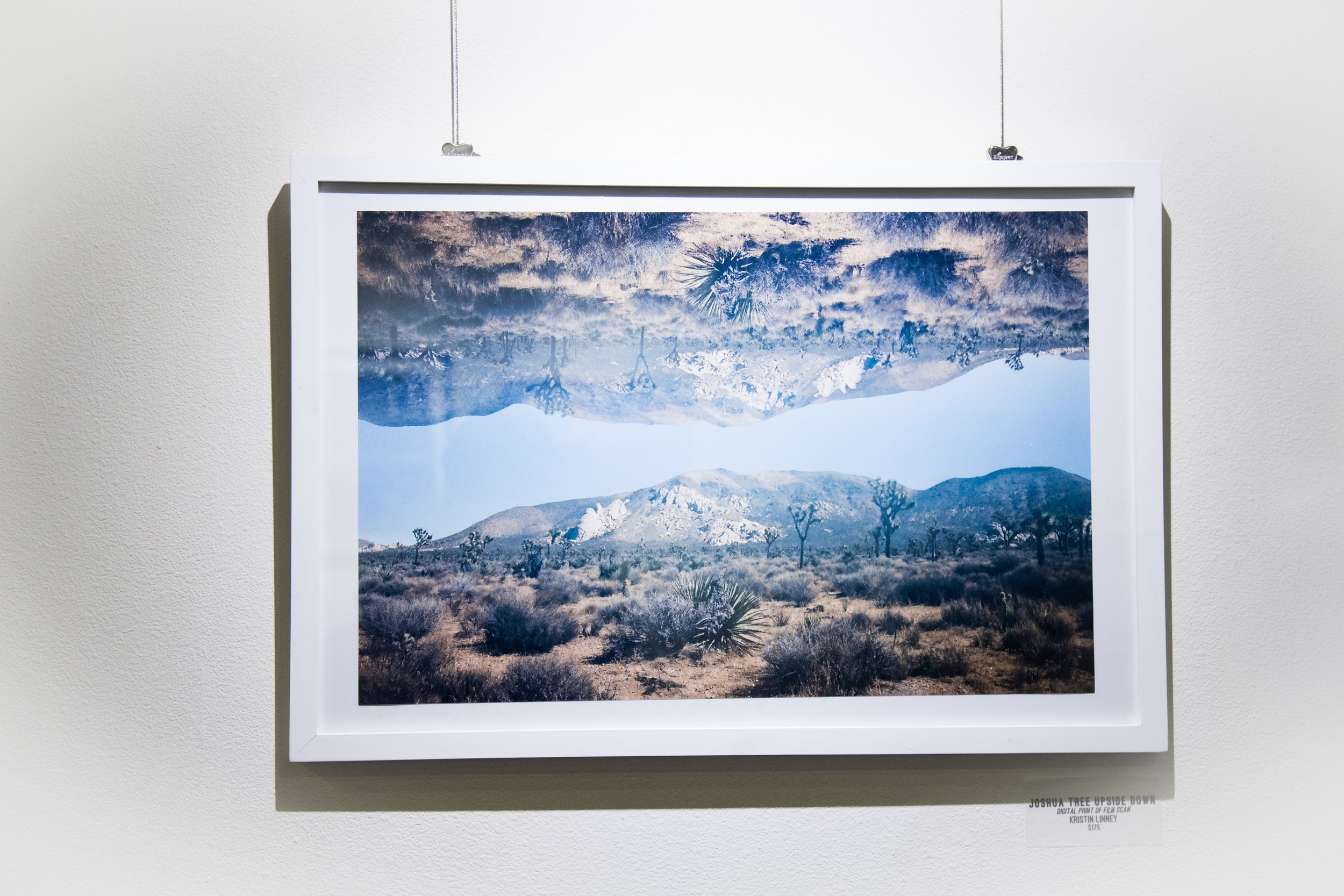 Joshua Tree Upside Down   |digital print of film scan  by Kristin Linney