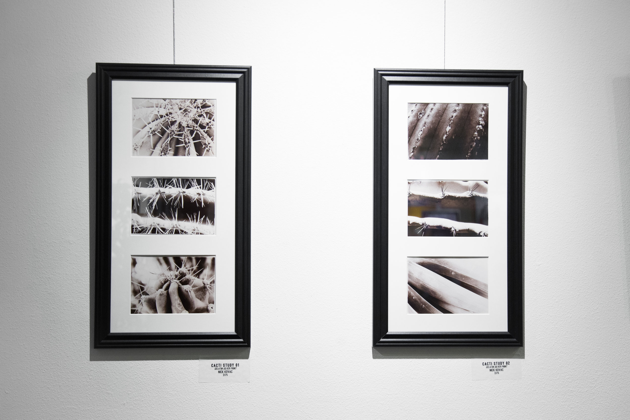 Cactus Study 01 &02  | gelatin silver prints  by Nick Kovac