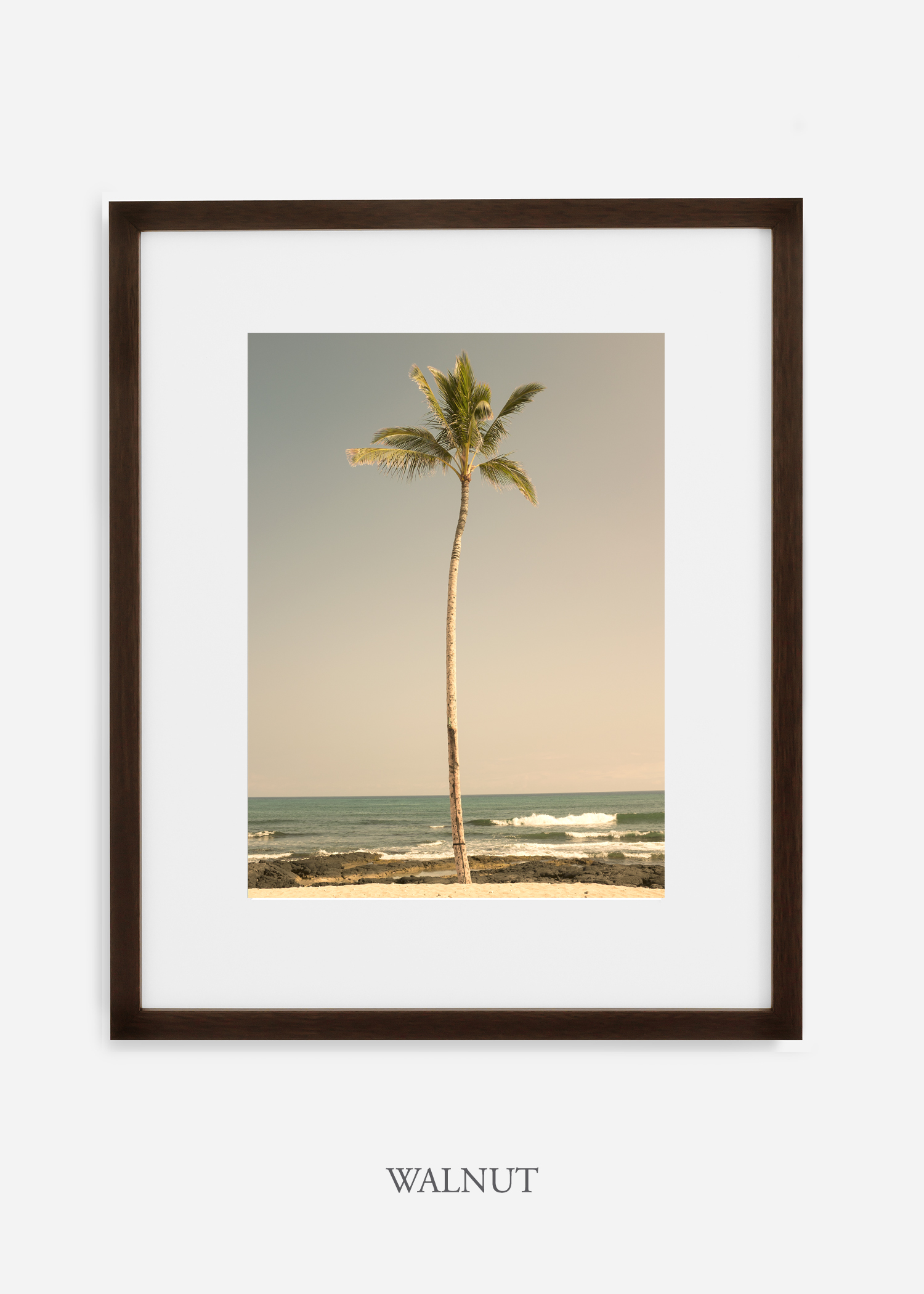 WilderCalifornia_PalmTree_No2_Art_Photography_interiordesign_walnutframe.jpg