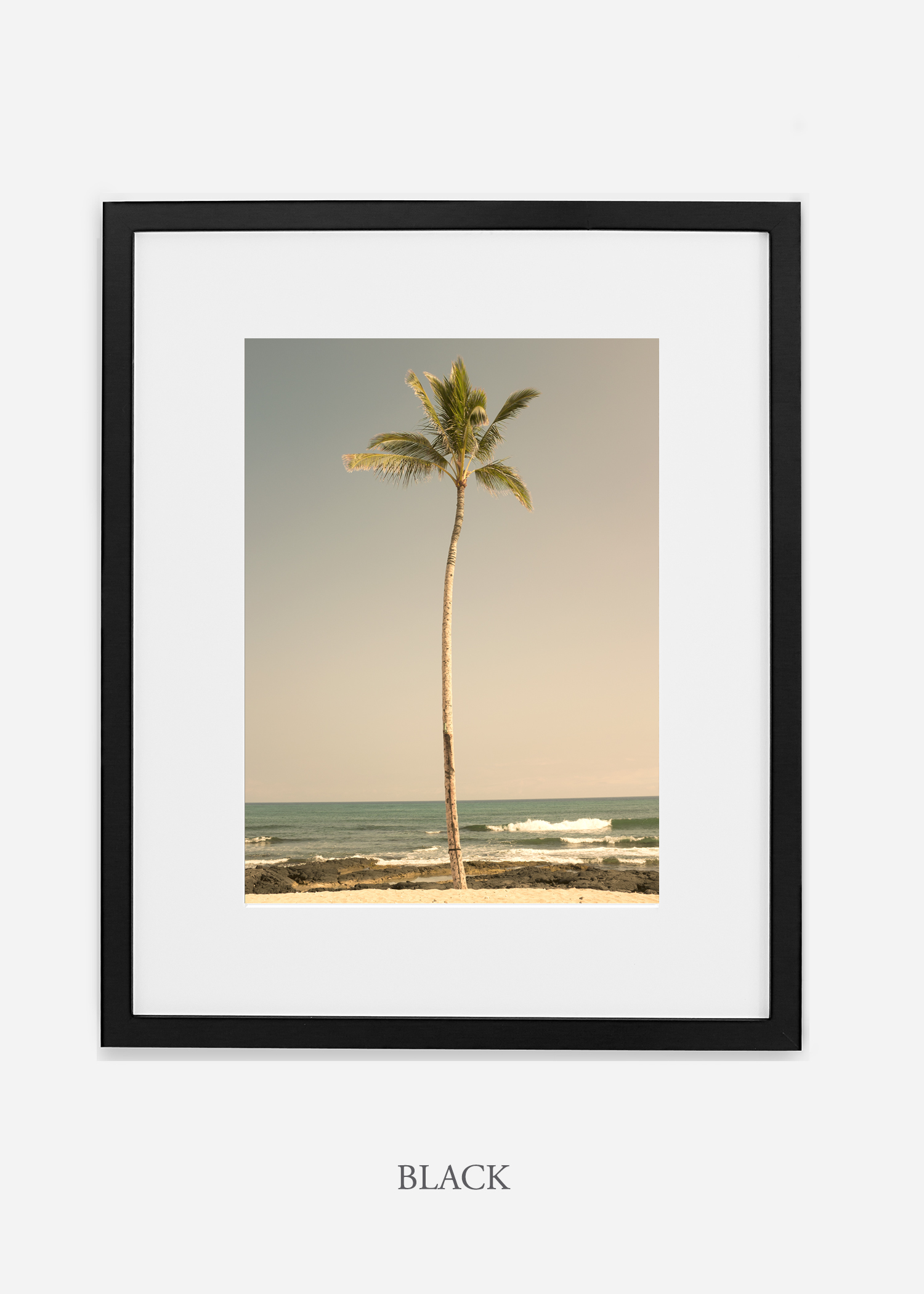 WilderCalifornia_PalmTree_No2_Art_Photography_interiordesign_blackframe.jpg