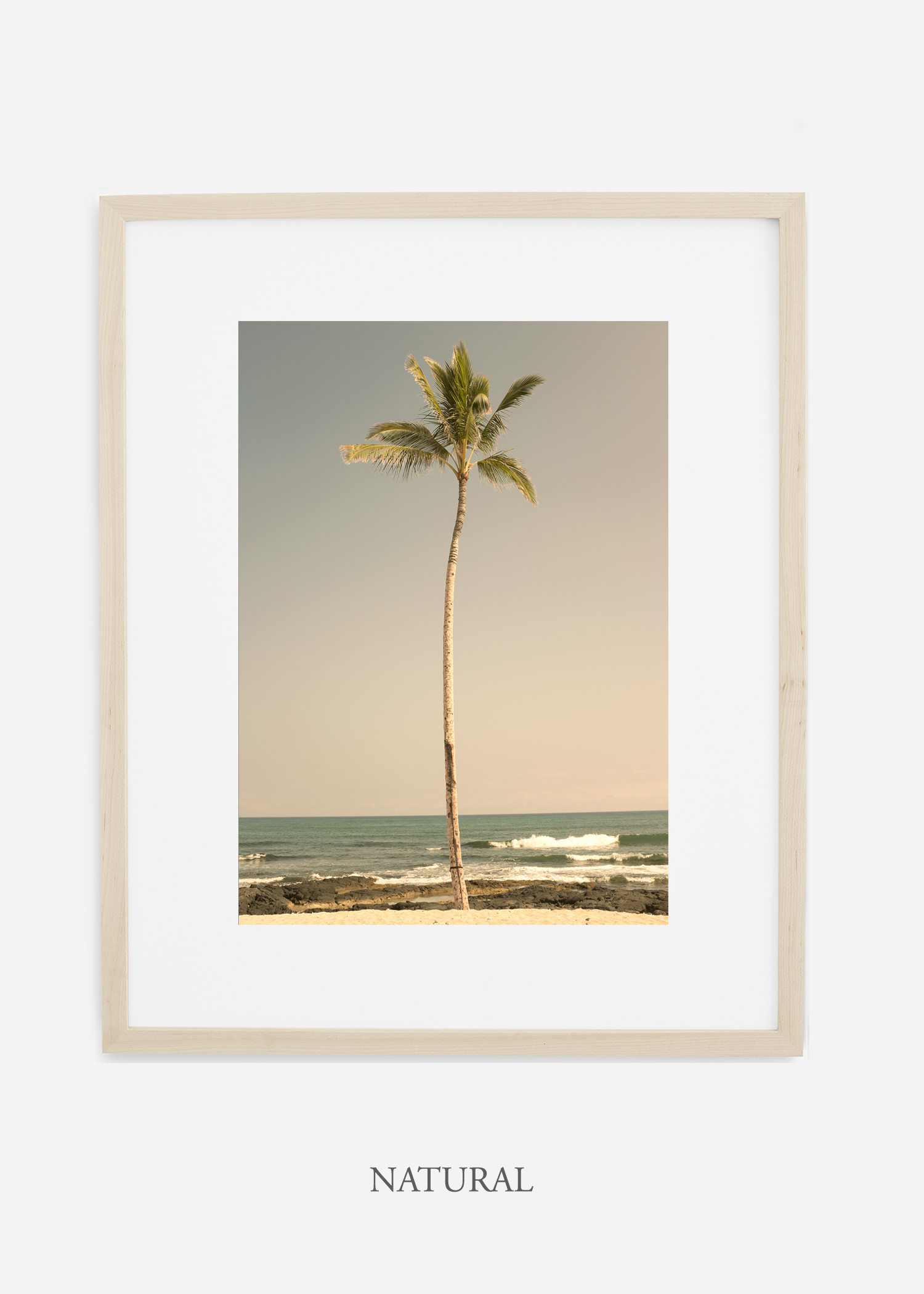 WilderCalifornia_PalmTree_No2_Art_Photography_interiordesign_naturalframe.jpg