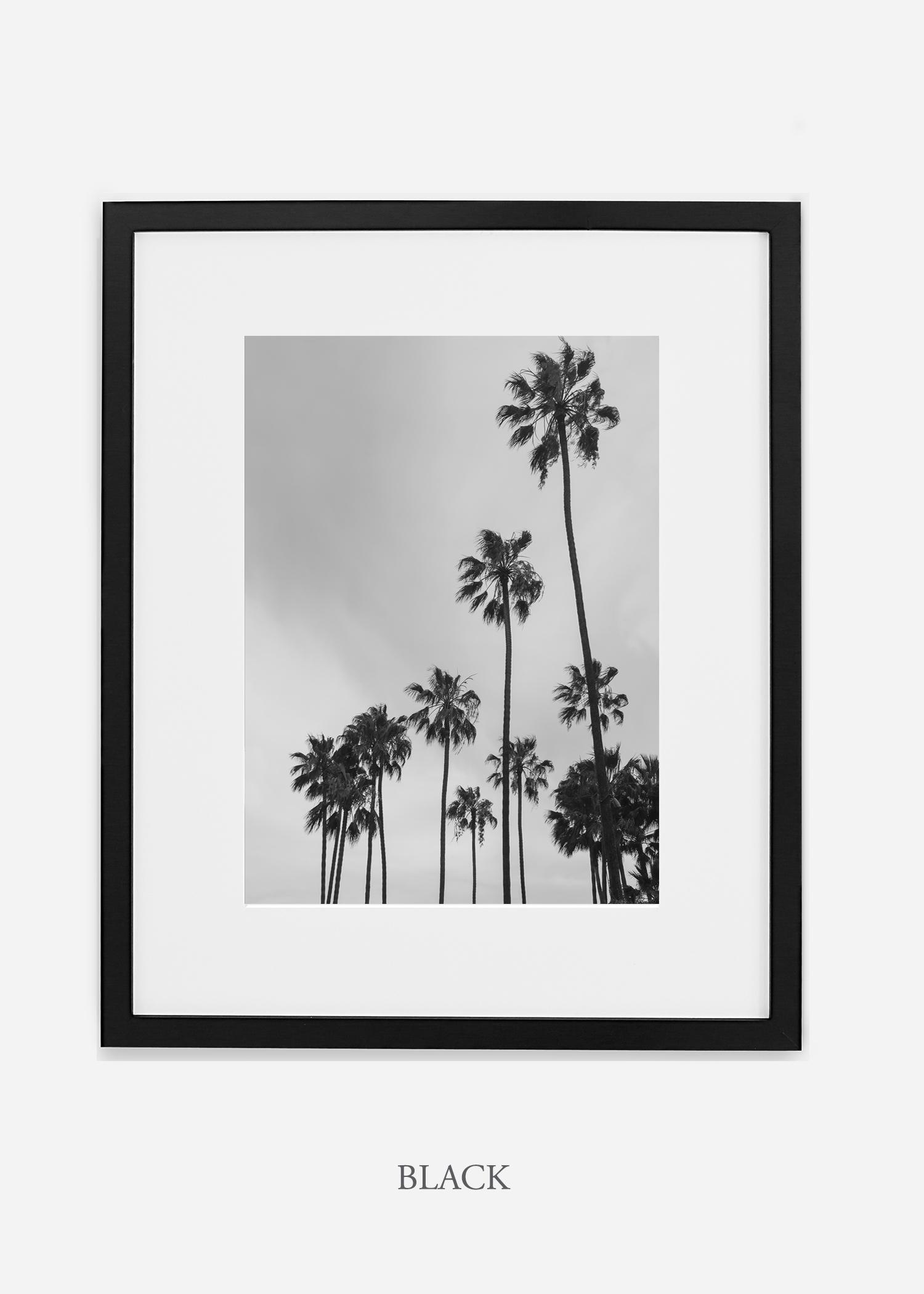 interiordesign_california_losangeles_palmtree_blackframe.jpg