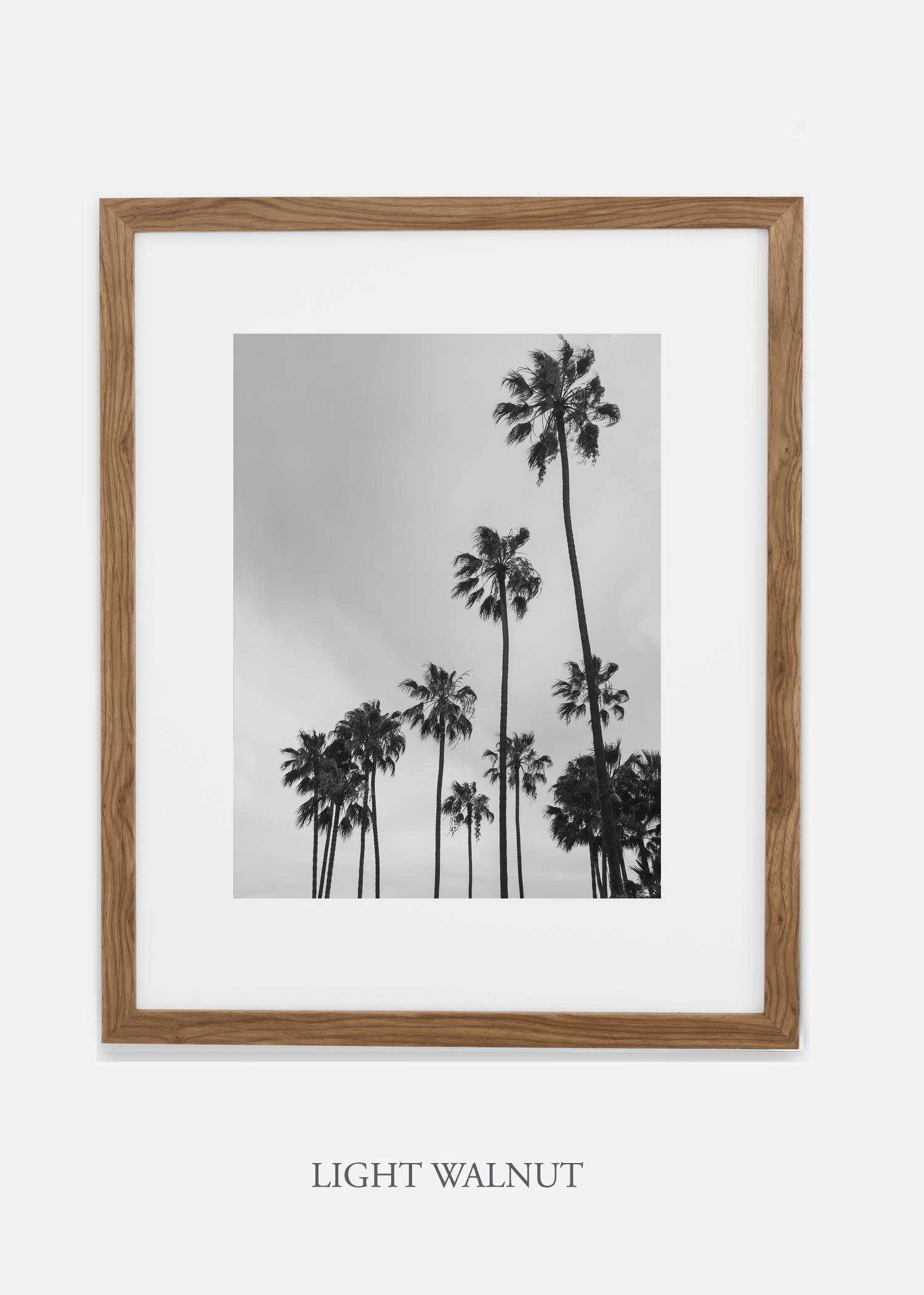 interiordesign_california_losangeles_palmtree_lightwalnutframe.jpg