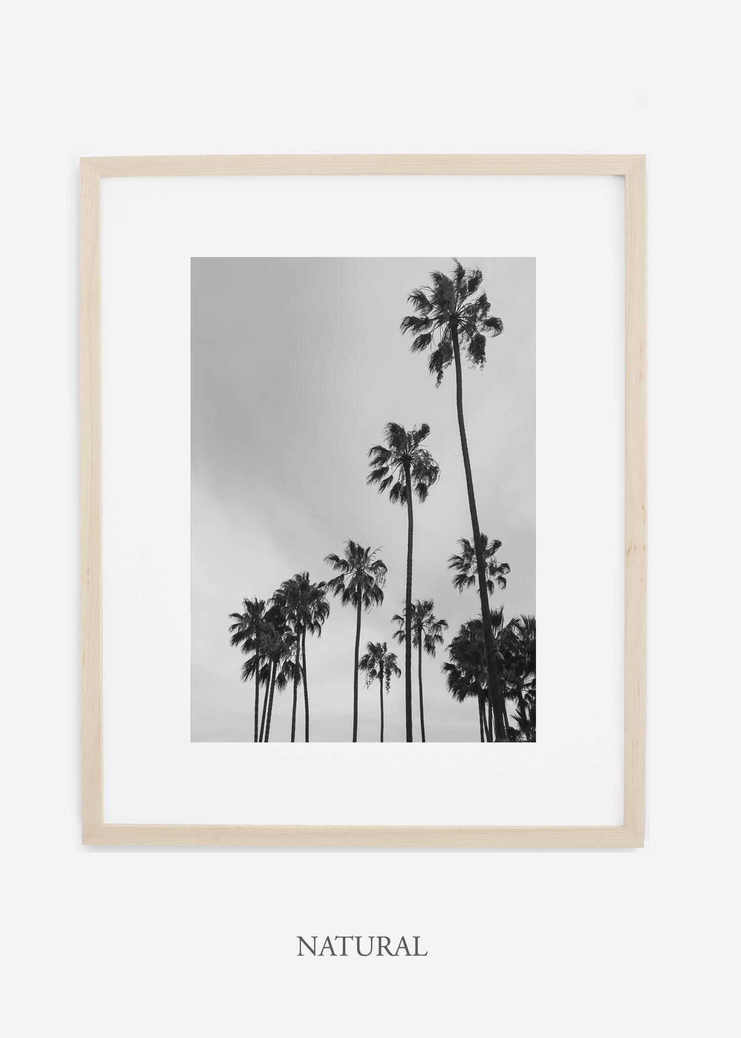 interiordesign_california_losangeles_palmtree_naturalframe.jpg