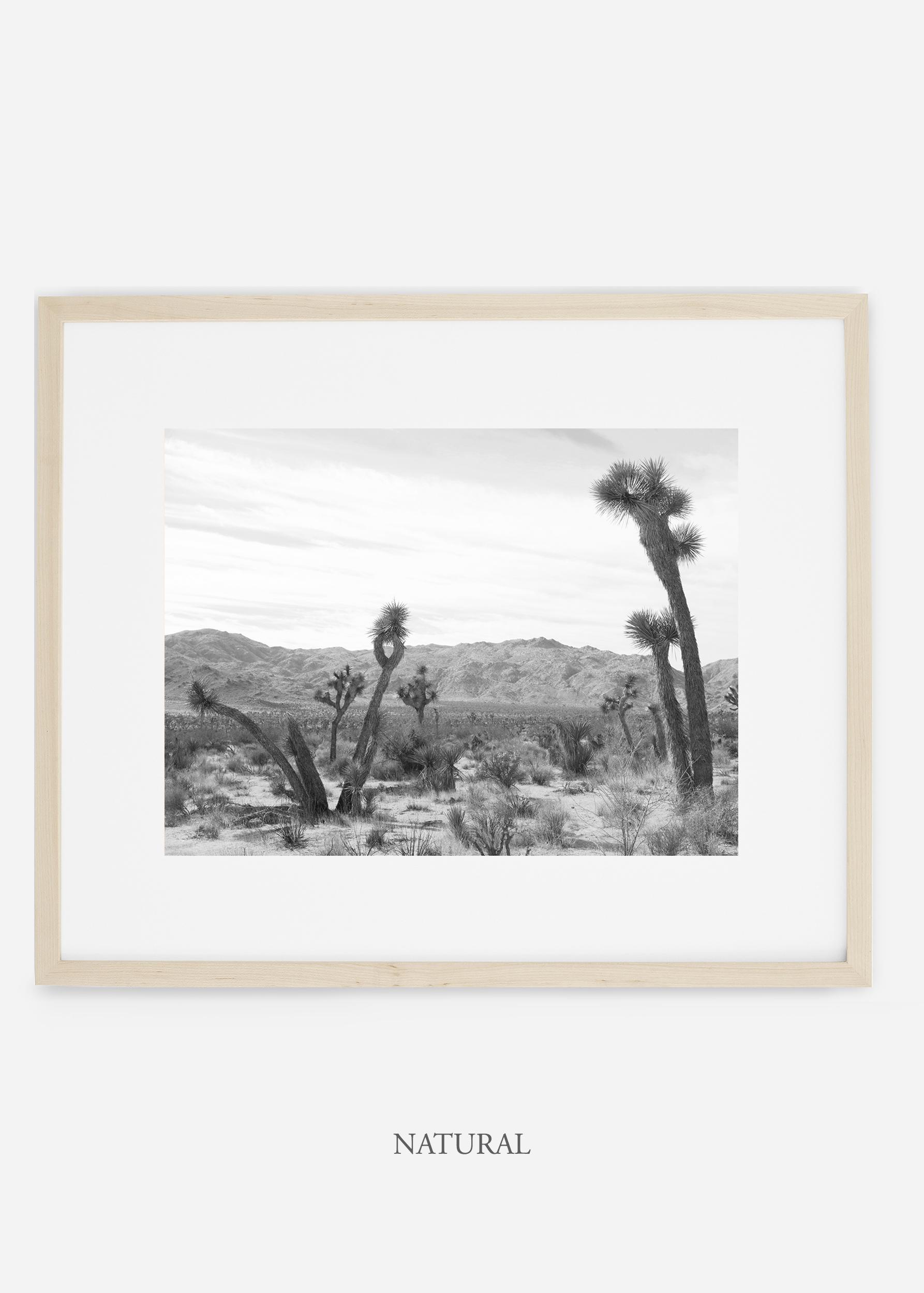 WilderCalifornia_naturalframe_JoshuaTree_No.4_interiordesign_cactusprint_art.jpg