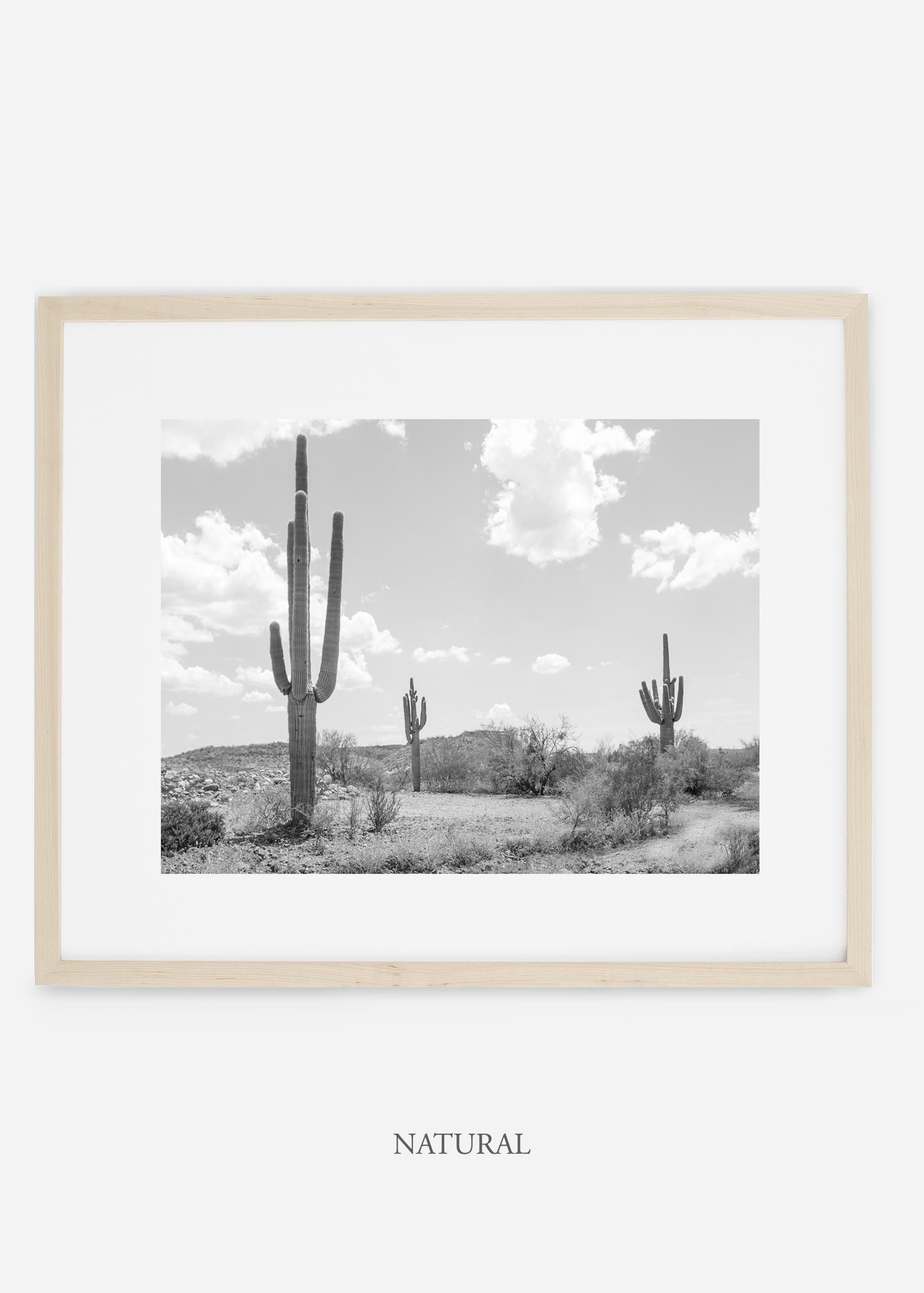 wildercalifornia_naturalframe_threesaguaro_cactus_art_interiordesign.jpg