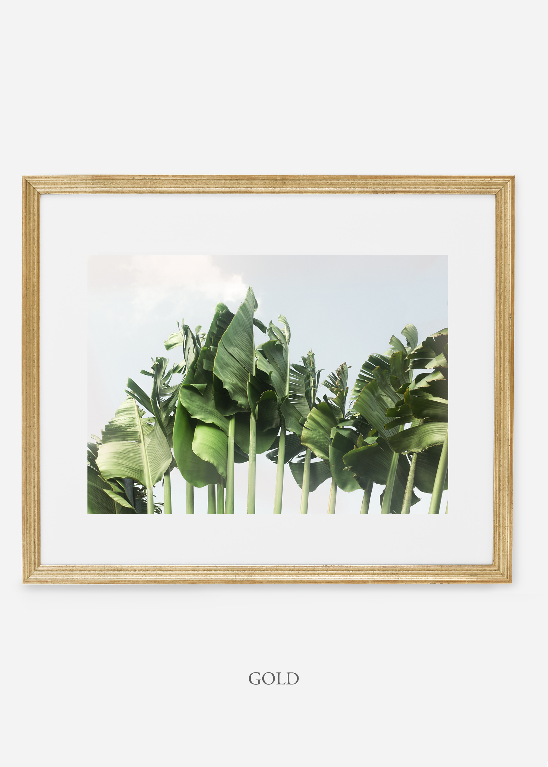 wildercalifornia_goldframe_tulum_bananaleaf_No.1_minimal_cactus_art_interiordesign_blackandwhite.jpg
