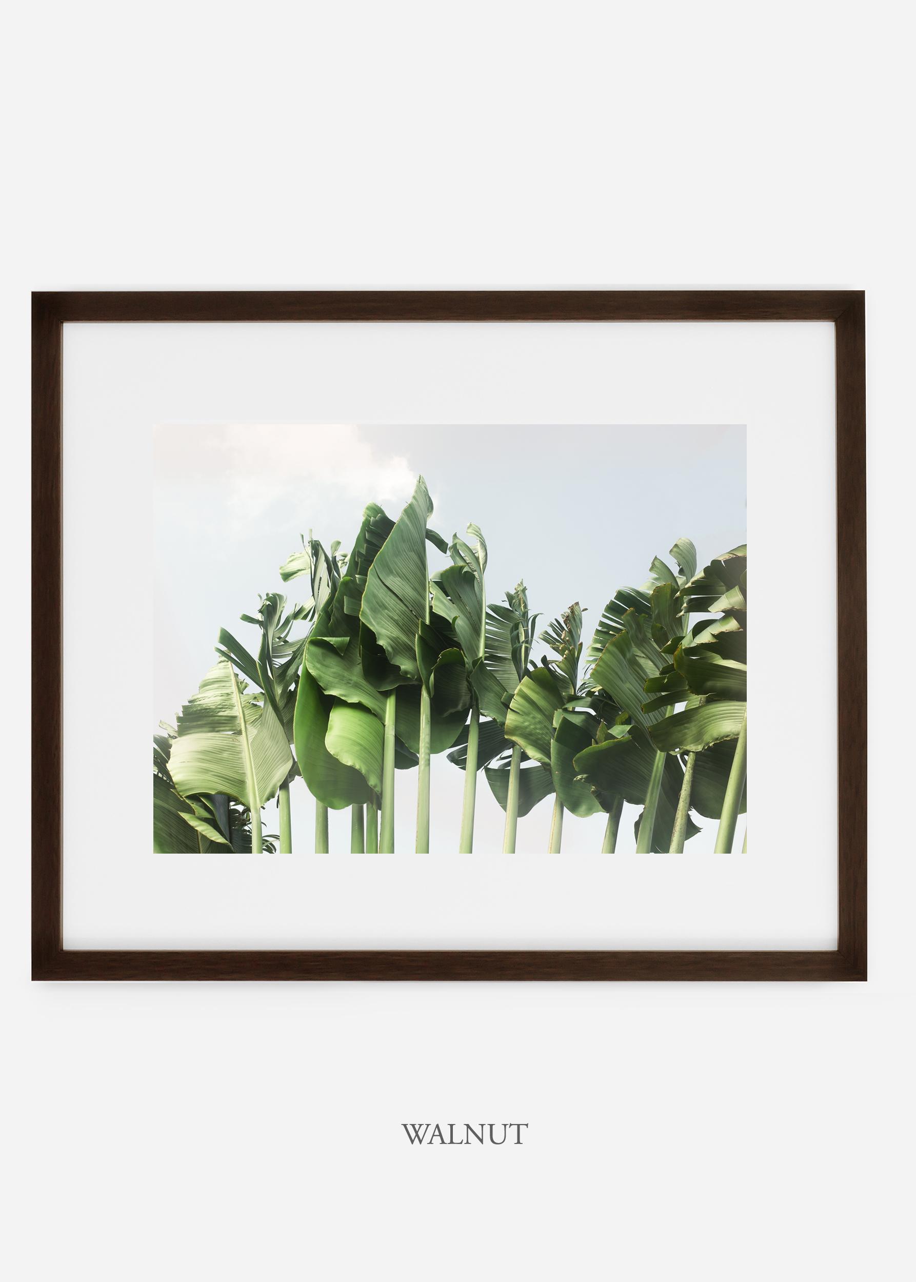 wildercalifornia_walnutframe_tulum_bananaleaf_No.1_minimal_cactus_art_interiordesign_blackandwhite.jpg