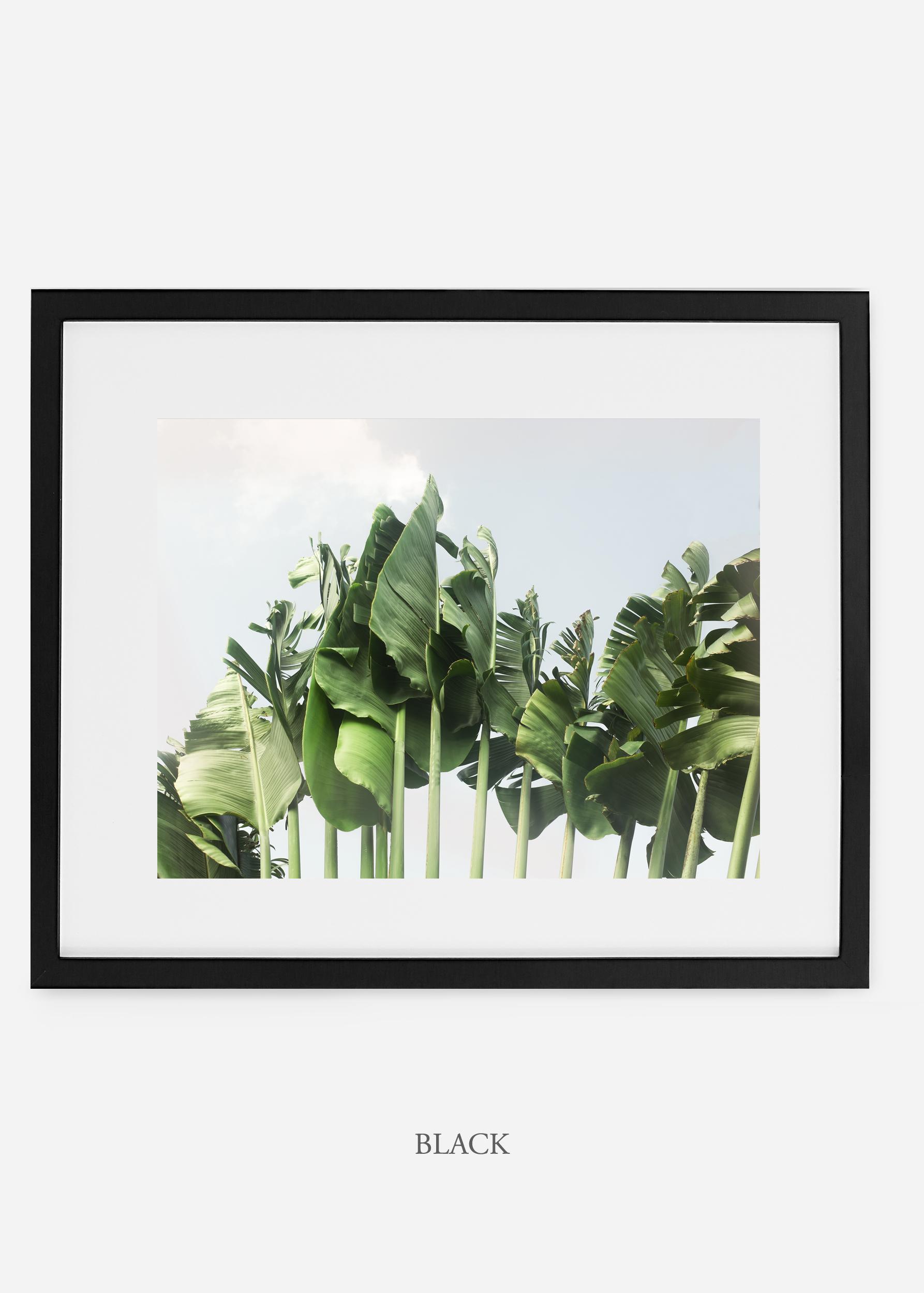 wildercalifornia_blackframe_tulum_bananaleaf_No.1_minimal_cactus_art_interiordesign_blackandwhite.jpg