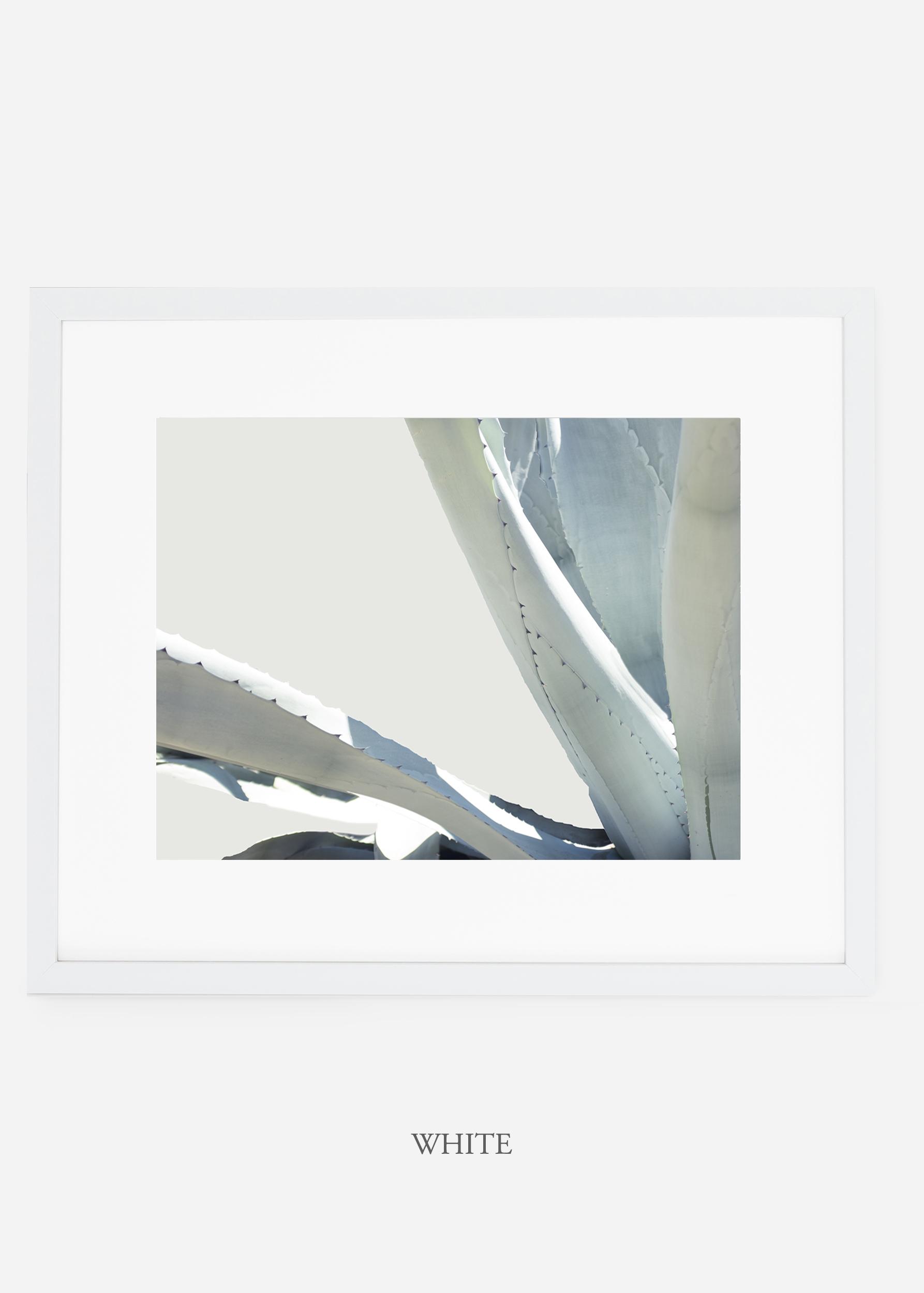 WilderCalifornia_whiteframe_WinterWhite_No6_Art_Photography_interiordesign_agave.jpg