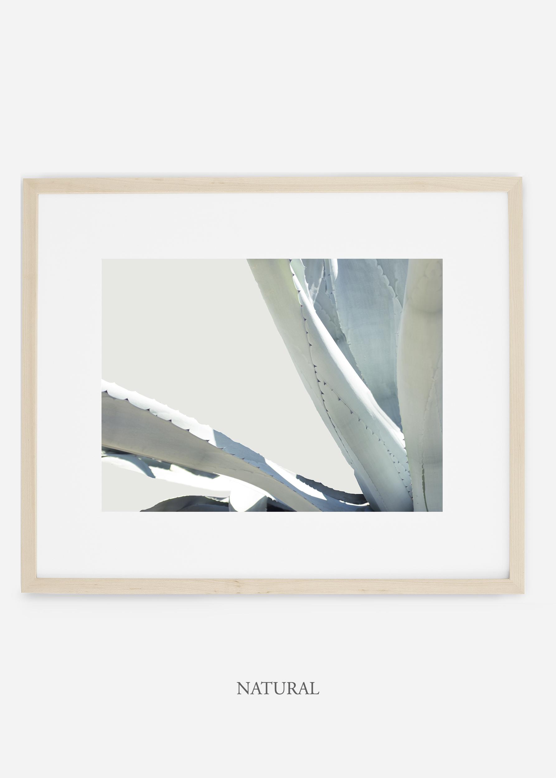 WilderCalifornia_naturalframe_WinterWhite_No6_Art_Photography_interiordesign_agave.jpg