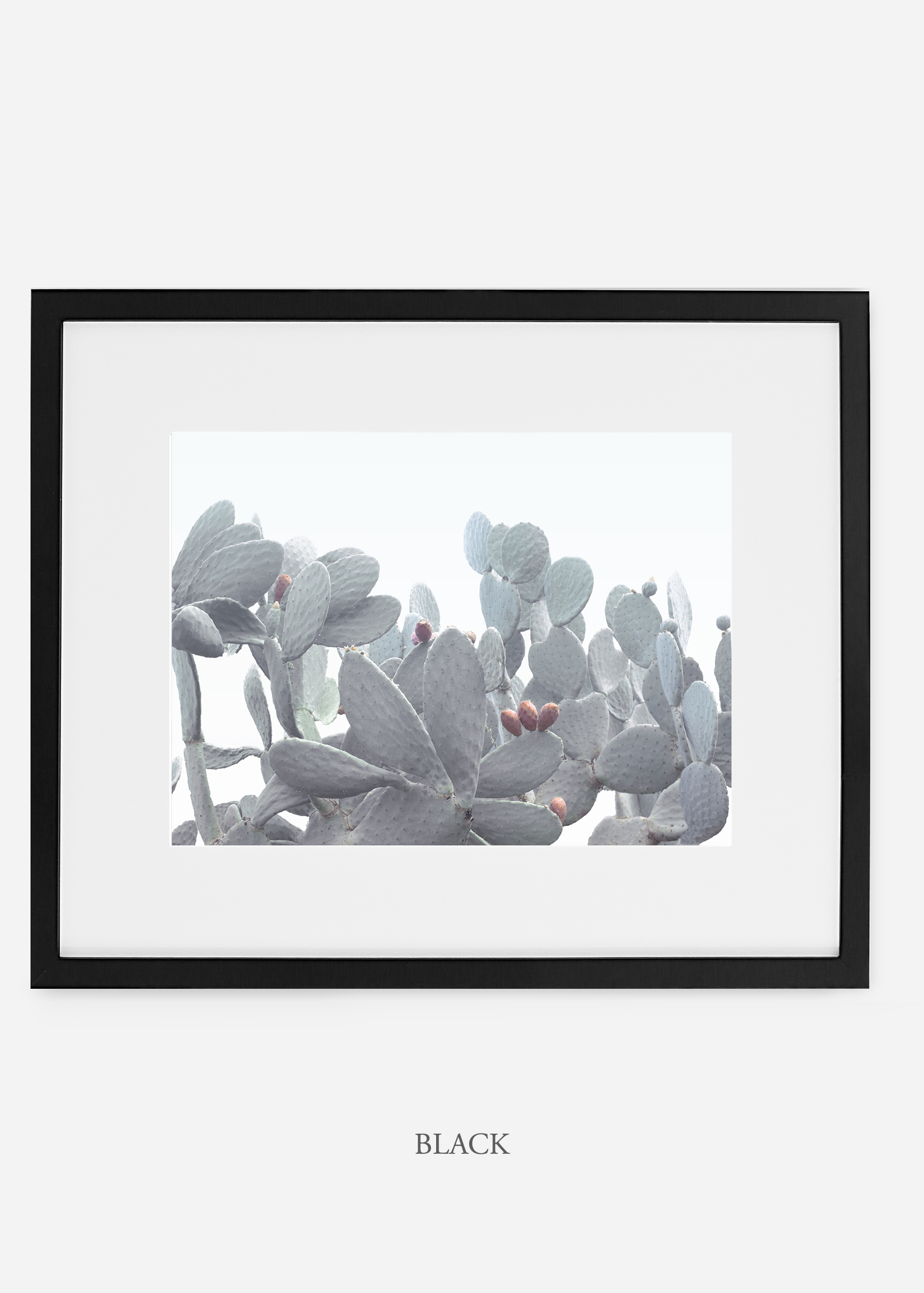 WilderCalifornia_blackframe_WinterWhite_No4_Art_Photography_interiordesign_agave.jpg