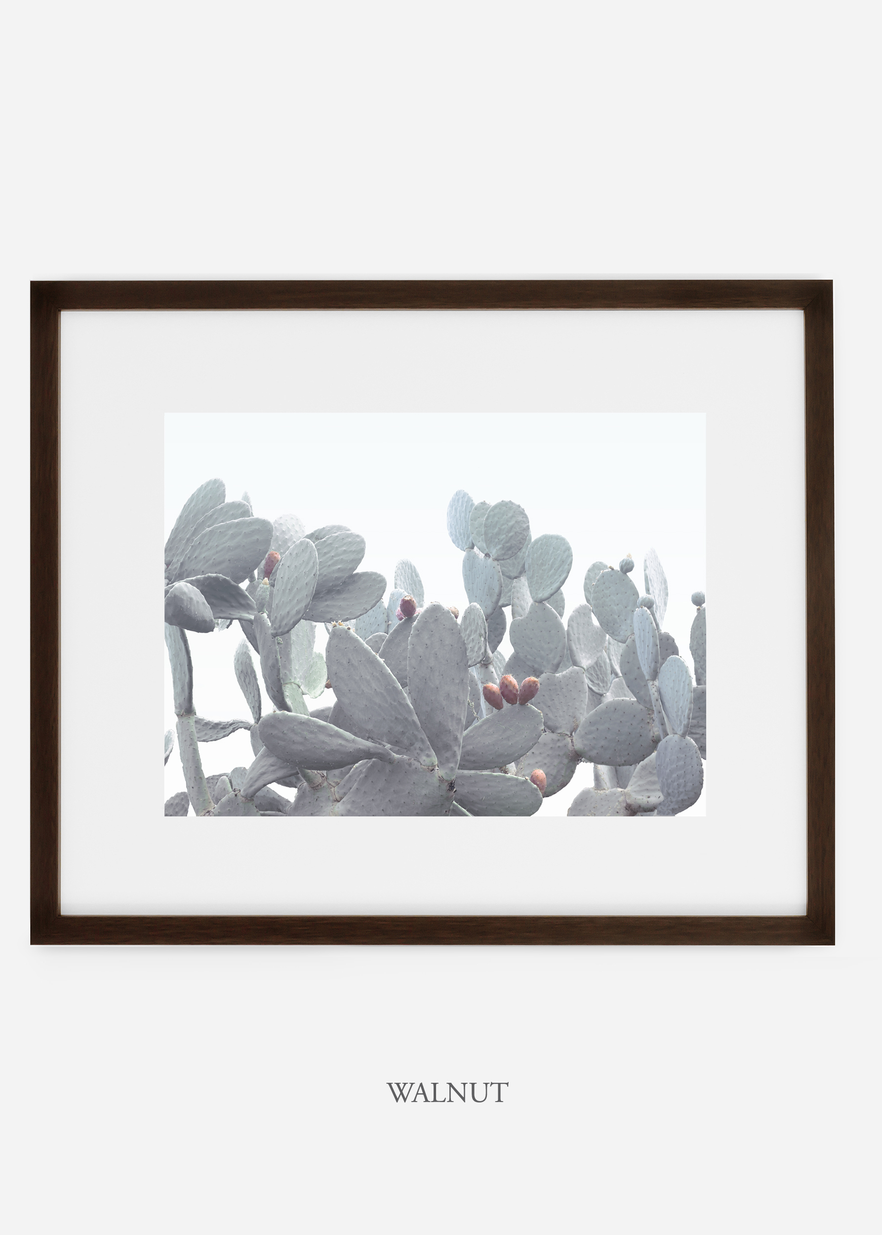 WilderCalifornia_walnutframe_WinterWhite_No4_Art_Photography_interiordesign_agave.jpg