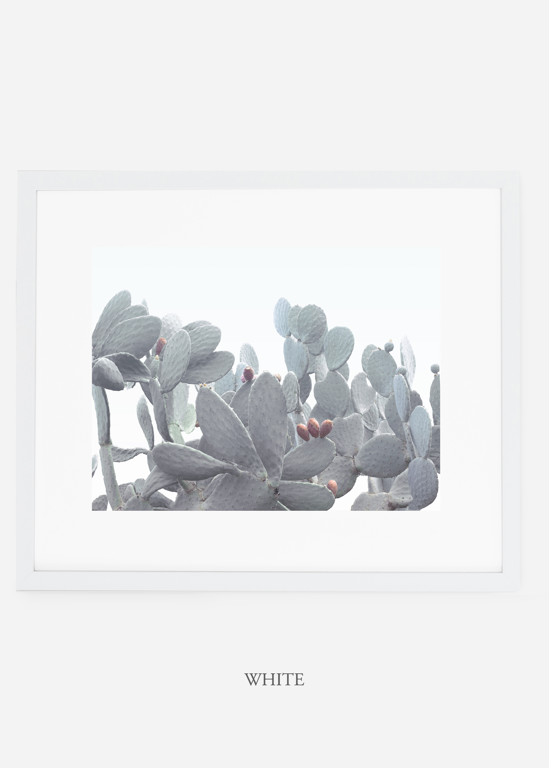 WilderCalifornia_whiteframe_WinterWhite_No4_Art_Photography_interiordesign_agave.jpg
