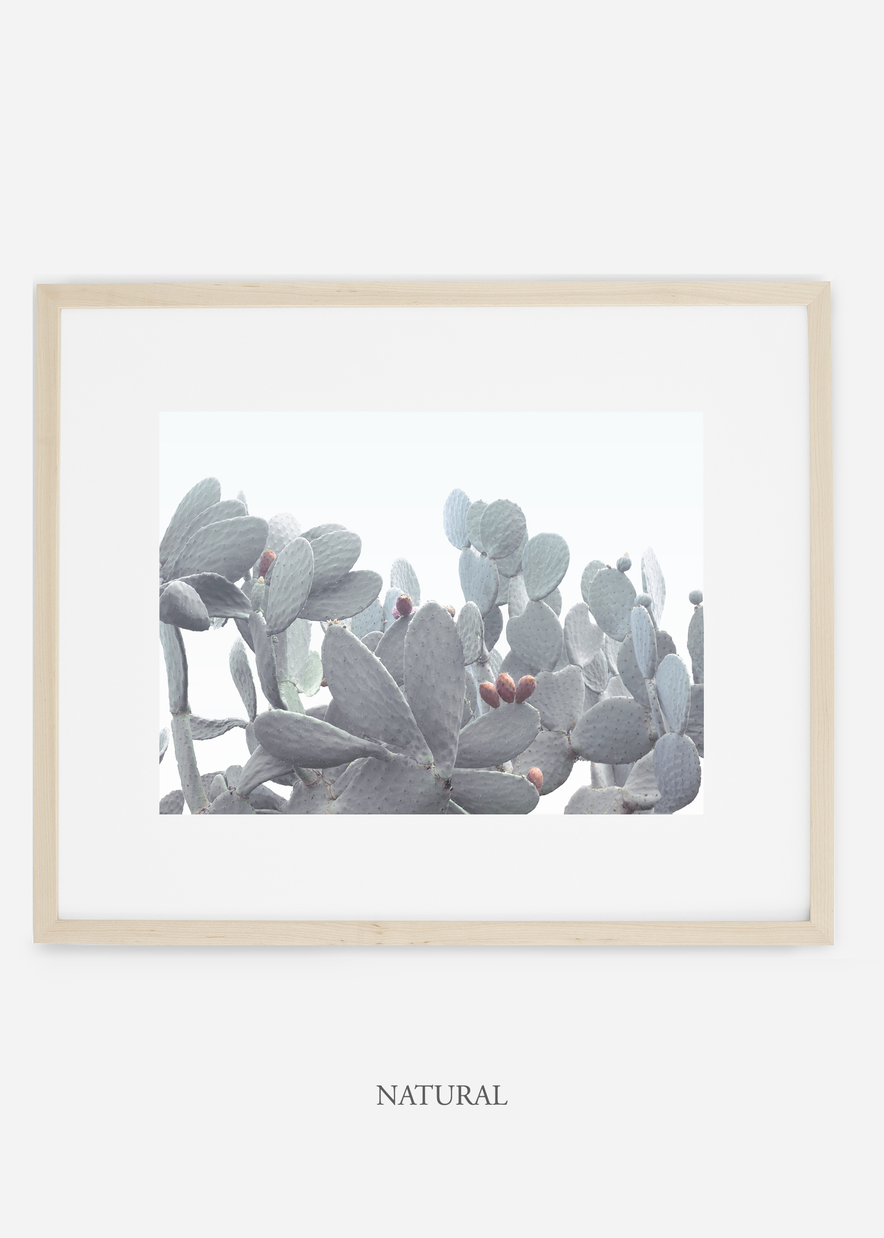 WilderCalifornia_naturalframe_WinterWhite_No4_Art_Photography_interiordesign_agave.jpg